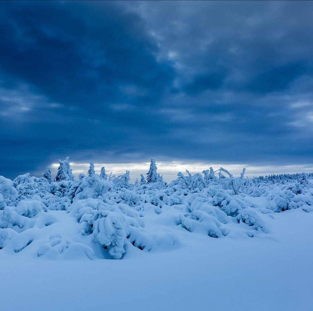 Les hautes chaumes des Vosges en hiver