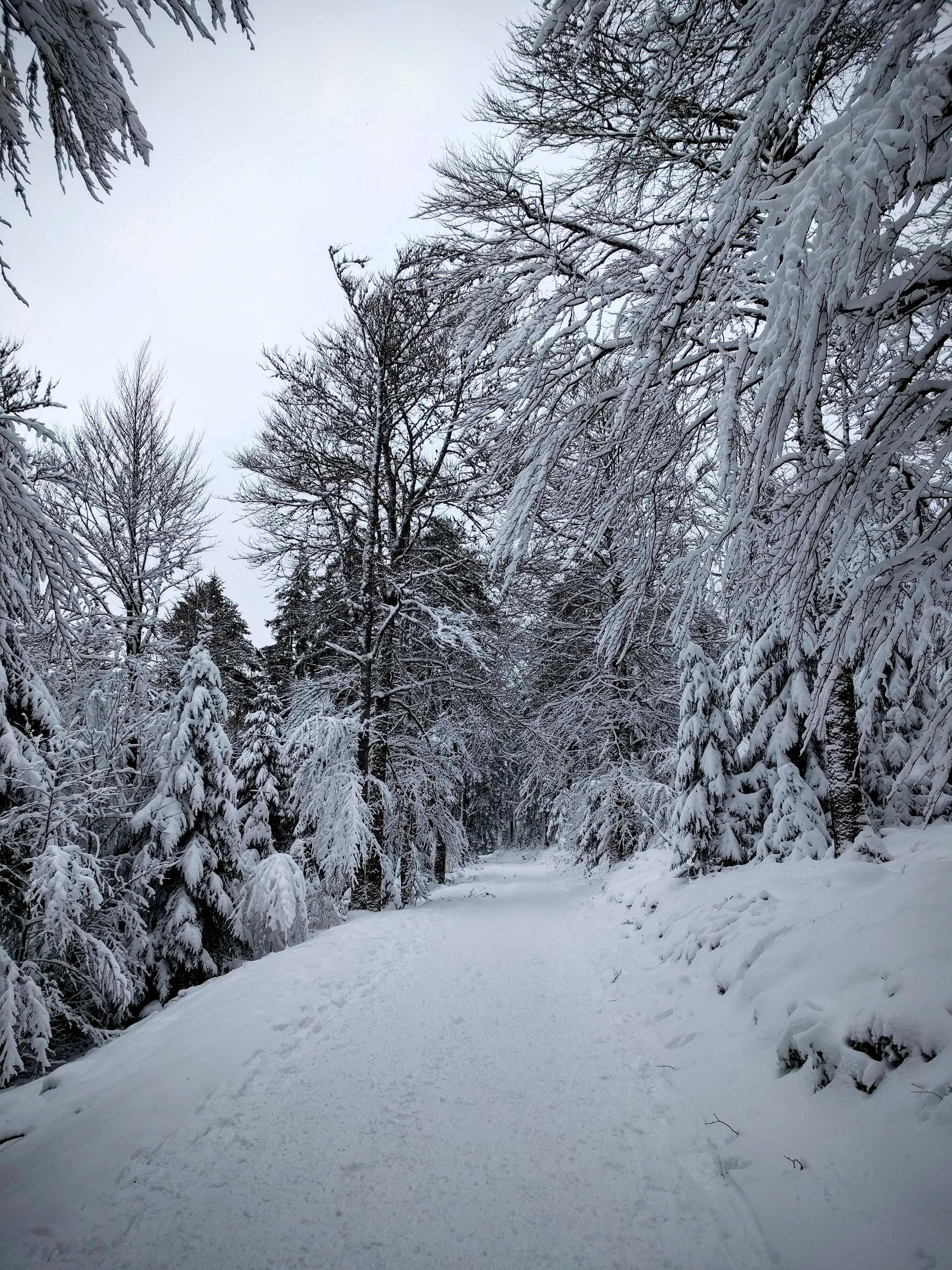 Chemin dans une forêt enneigée dans les Vosges