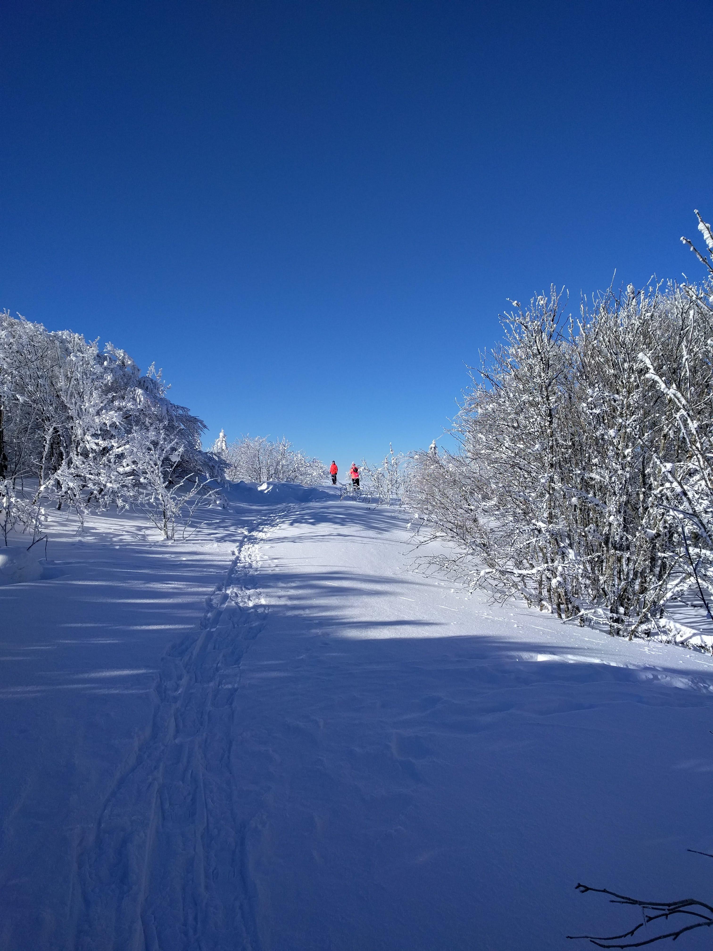 paysage vosges en hiver