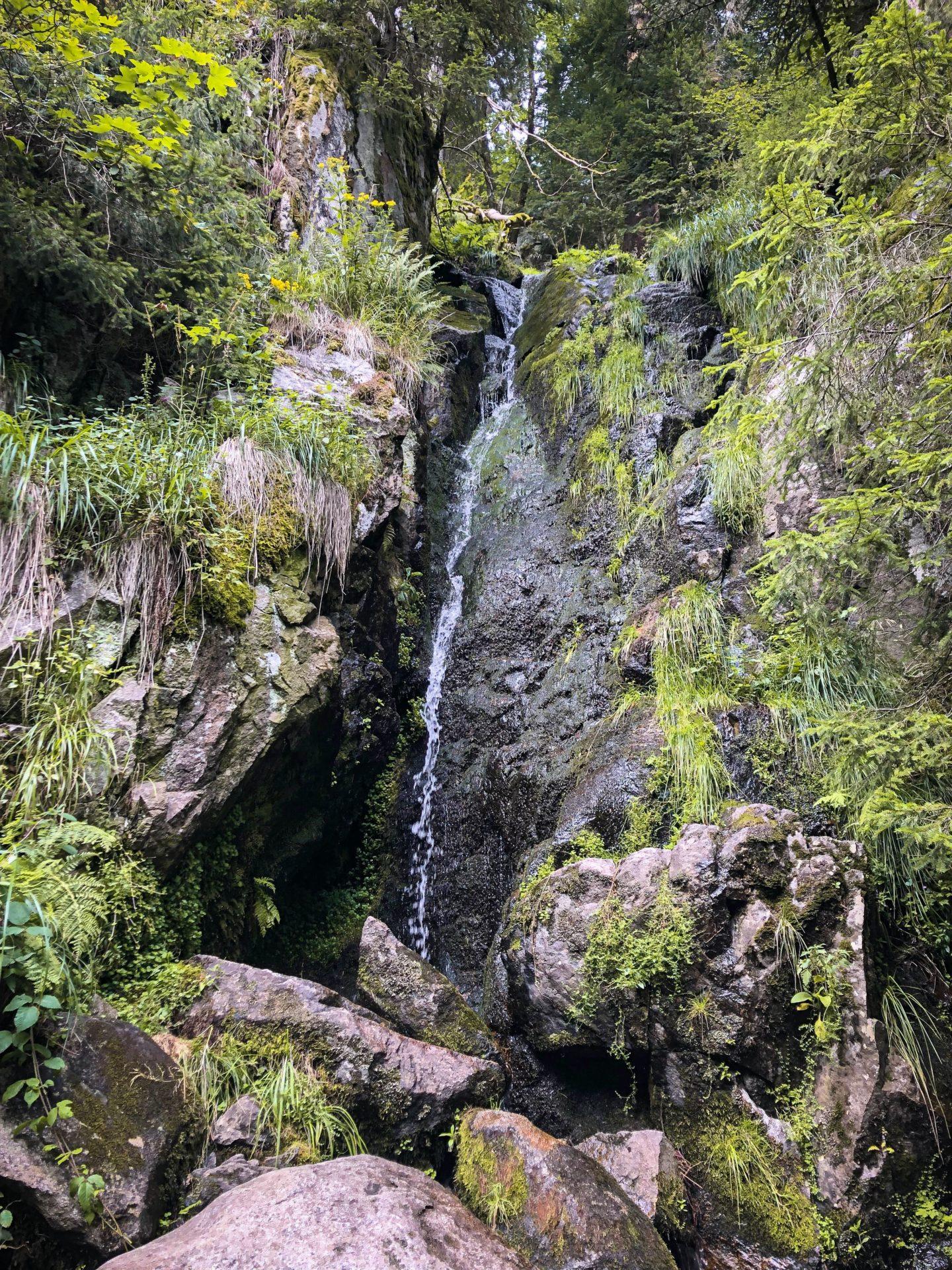 Une source d'eau fraîche dans les Vosges sur le sentier des Roches