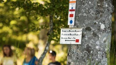 Plusieurs panneaux directionnels de randonnée dans les Vosges autour du Ballon d'Alsace