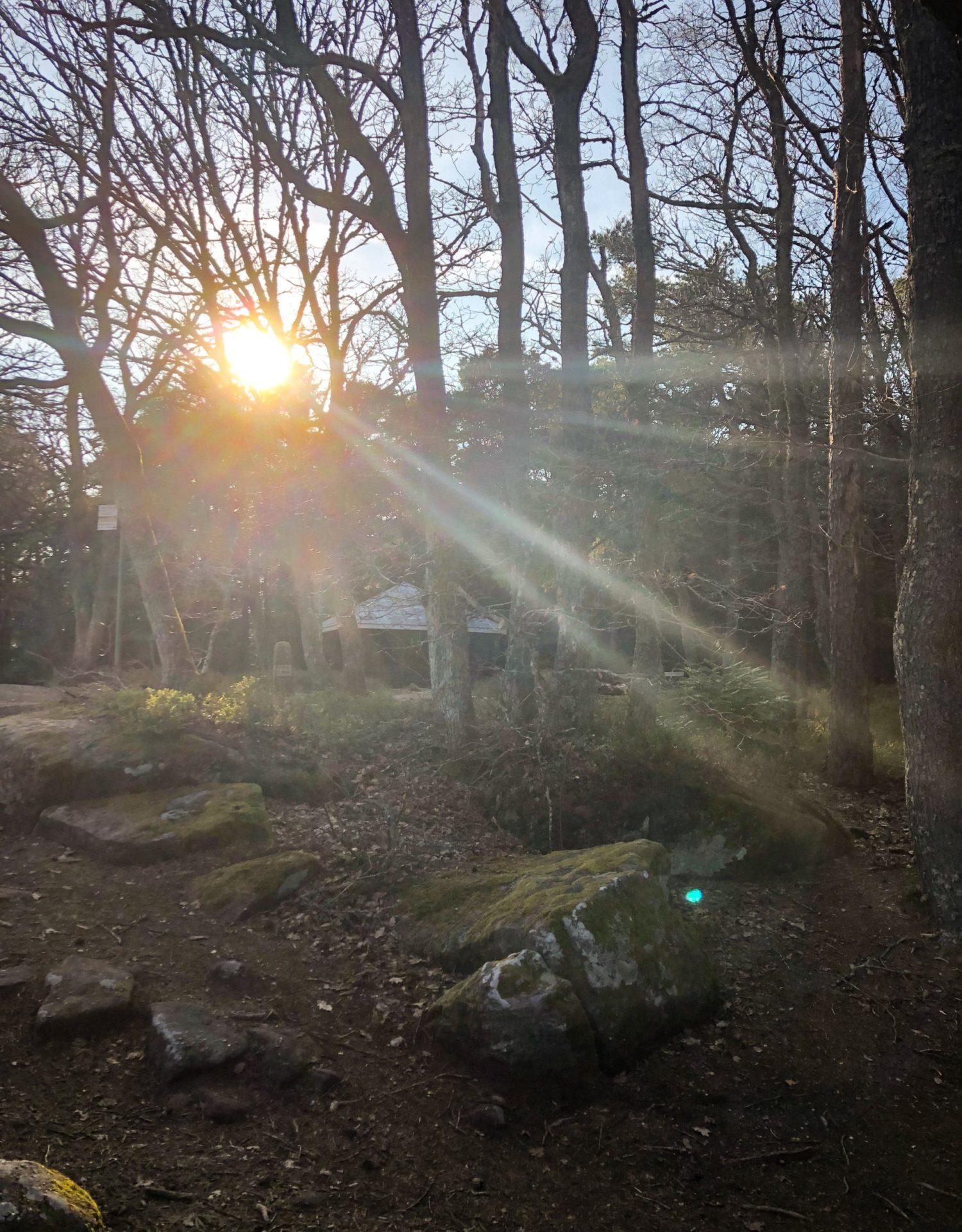 L'abri du Maennelstein dans les Vosges à côté du Mont Sainte-Odile
