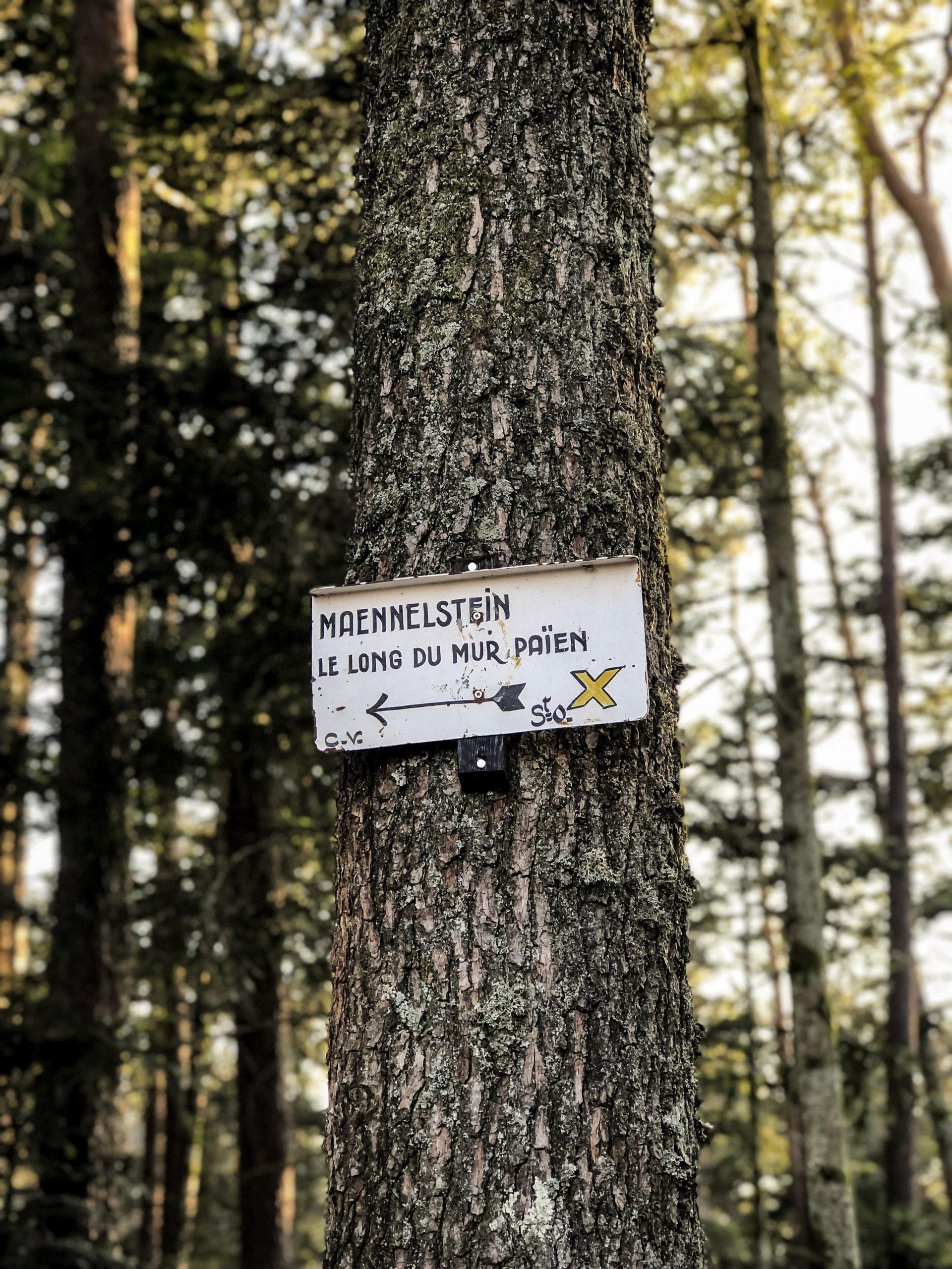 Panneau directionnel du Club Vosgien indiquant le Maennelstein