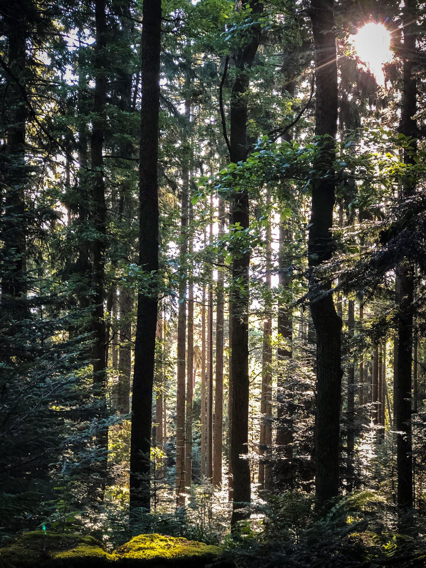 Rayons de soleil à travers la forêt