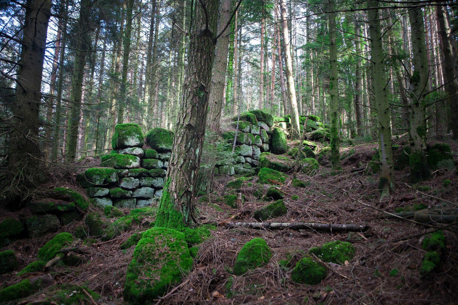 Vestiges du mur païen près du Mont Sainte-Odile dans les Vosges