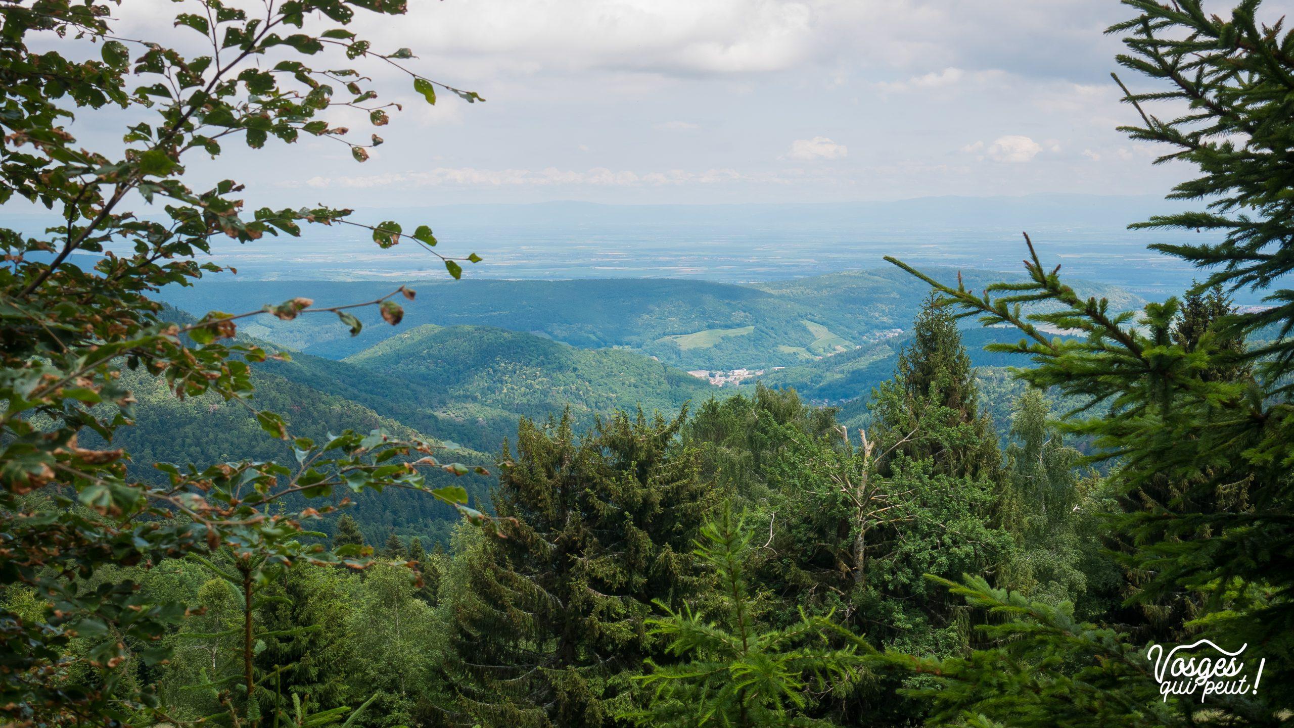 Plaine d'Alsace vue depuis le Liserwasen