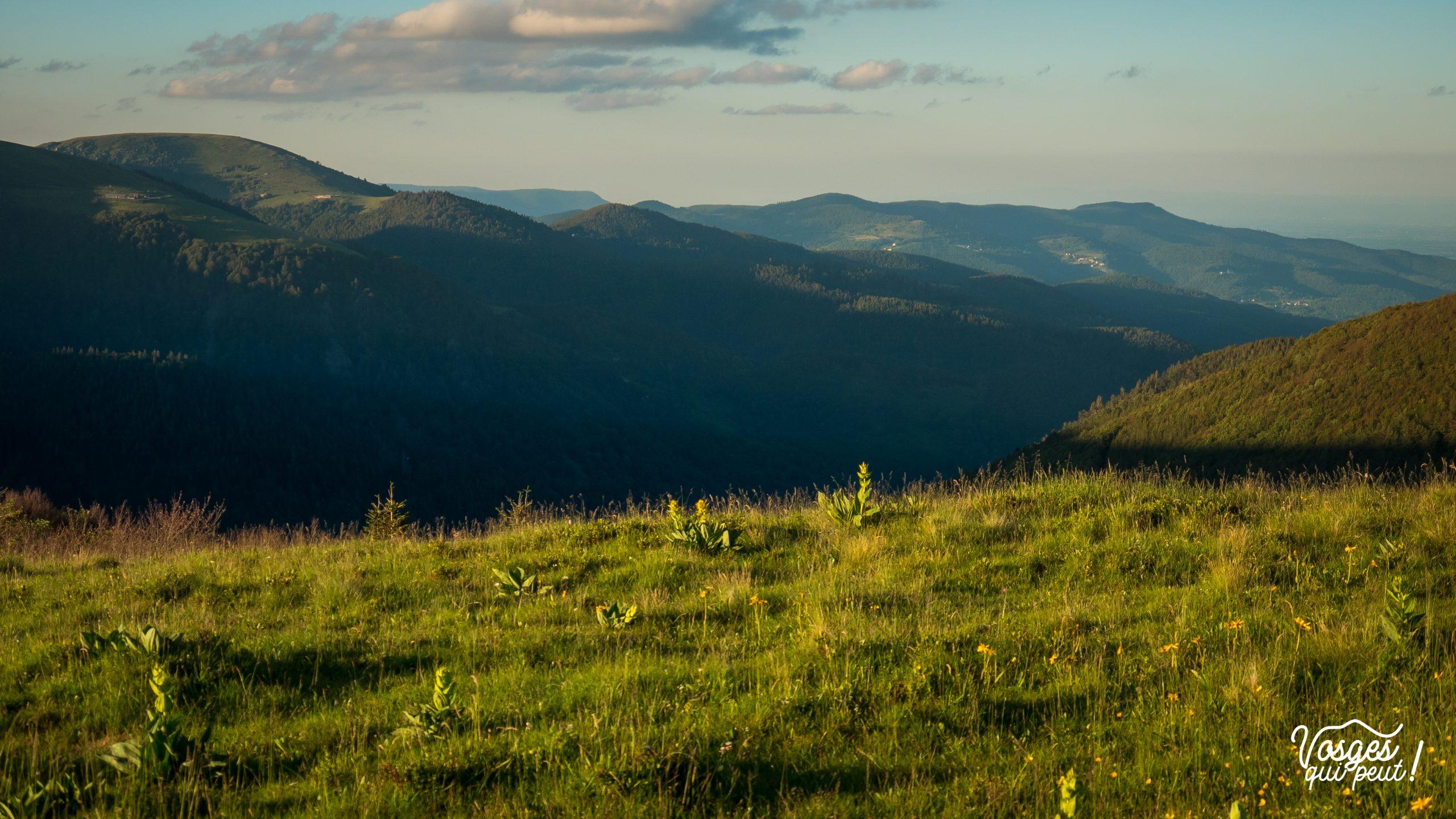 Vue sur la vallée du Wiedenbachrunz depuis la cabane du Neurod