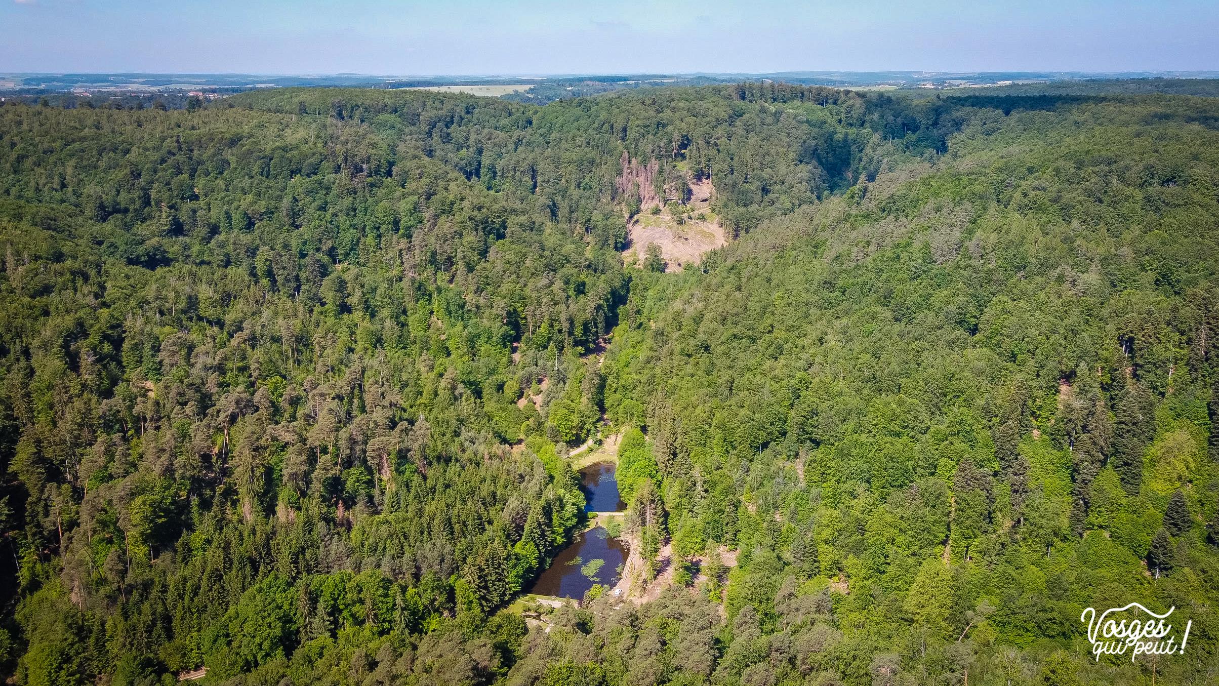 Lacs et forêts dans les Vosges du Nord