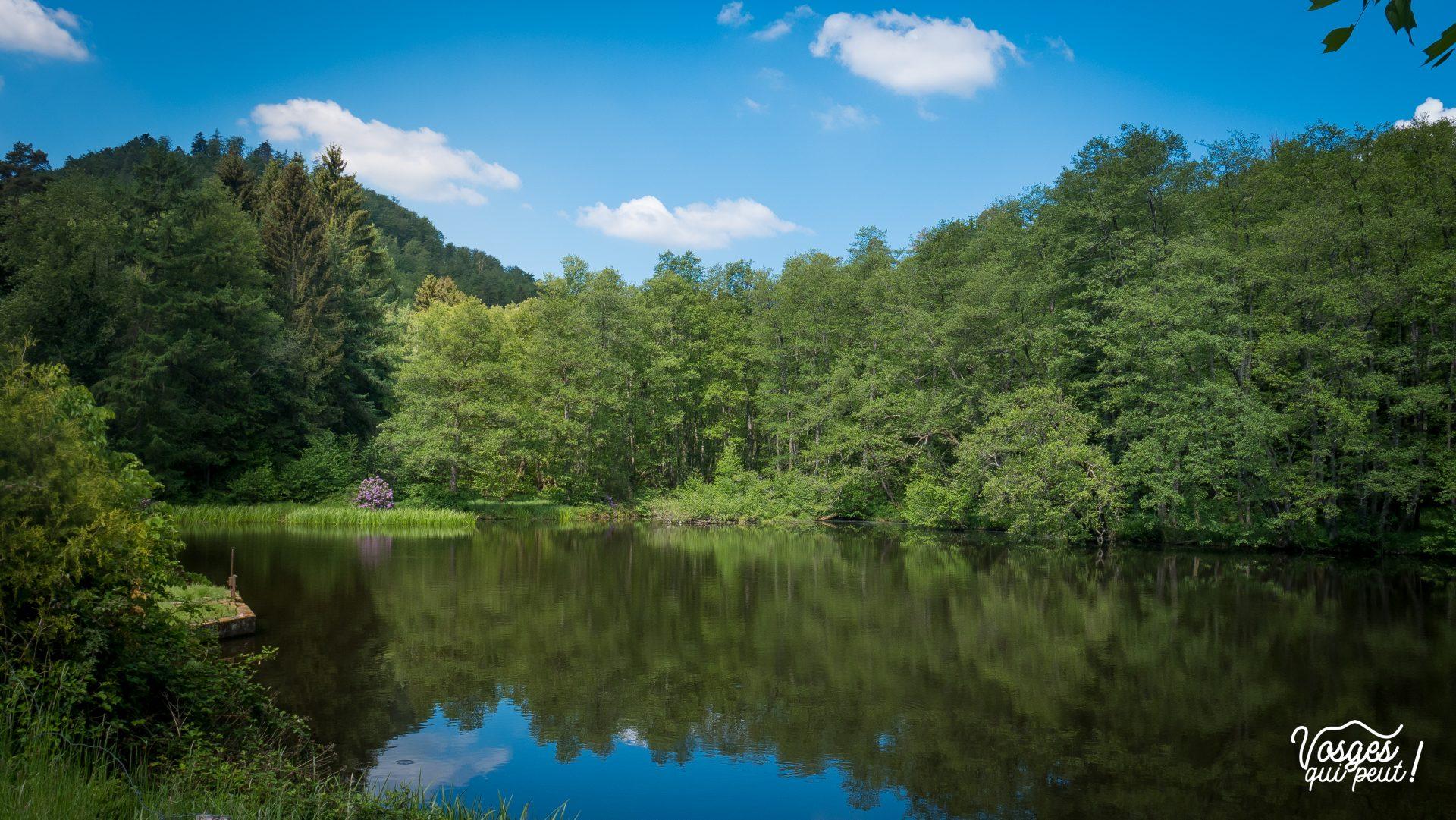 Un étang dans les Vosges du Nord