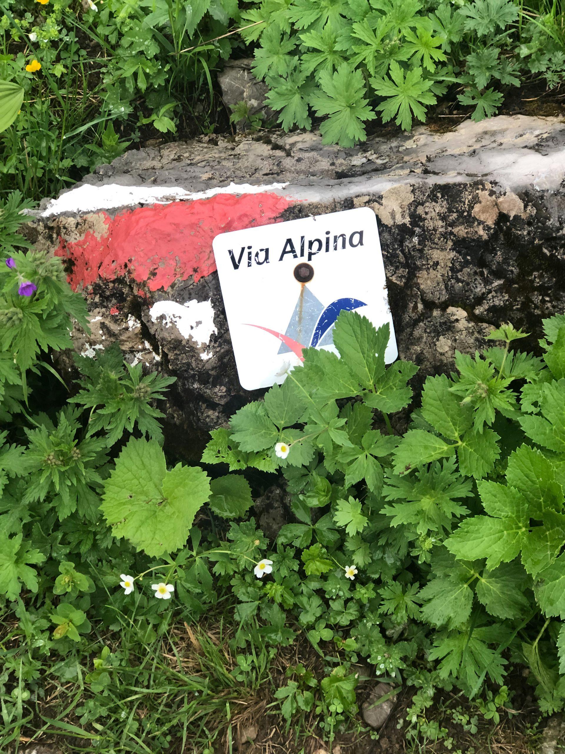 Borne de balisage de la Via Alpina dans les Alpes d'Allgäu en Bavière