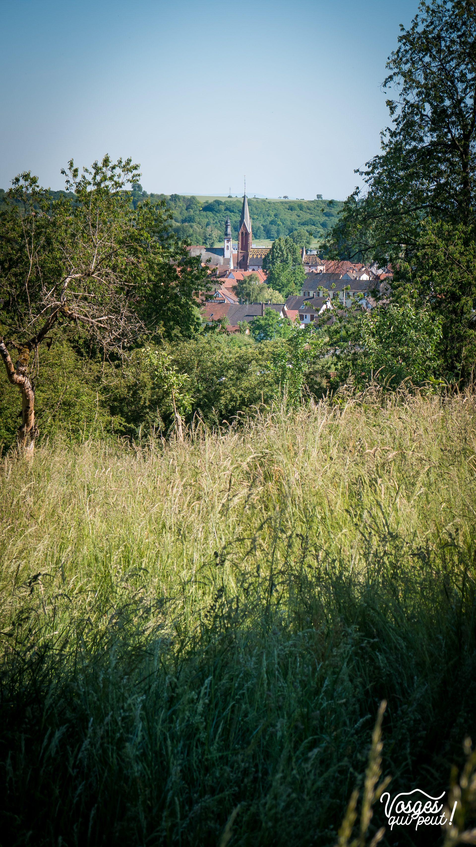 Vue sur le village de Wœrth en Alsace depuis un champ en hauteur