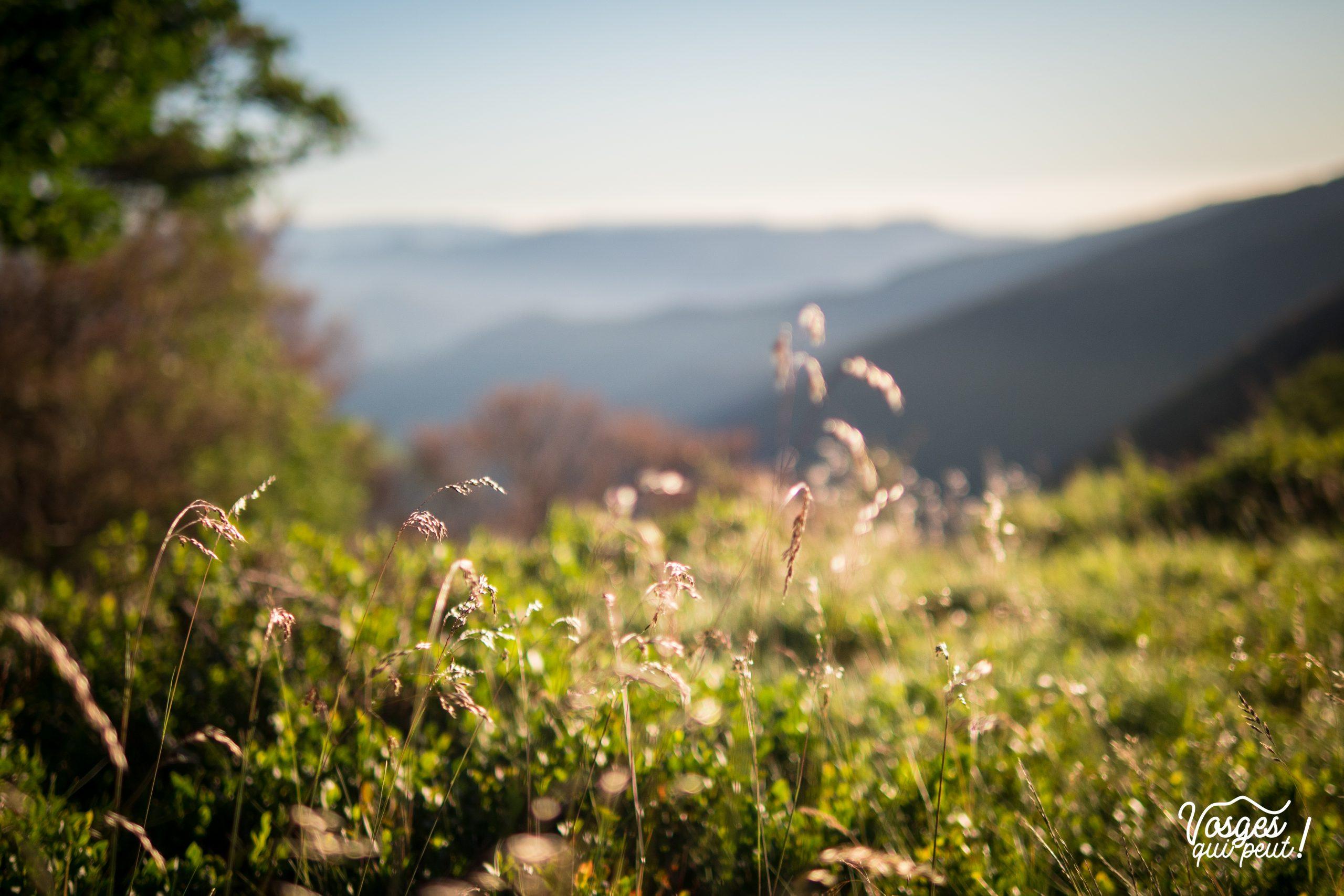 Lever du soleil après un bivouac dans les Vosges