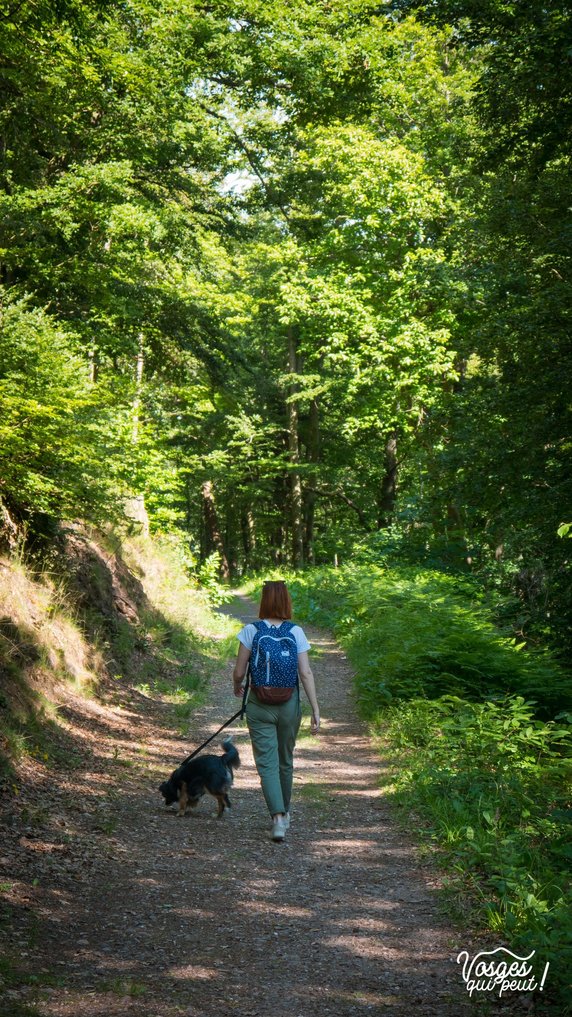 Une jeune fille et son chien font une randonnée en Alsace à proximité du château de Guirbaden