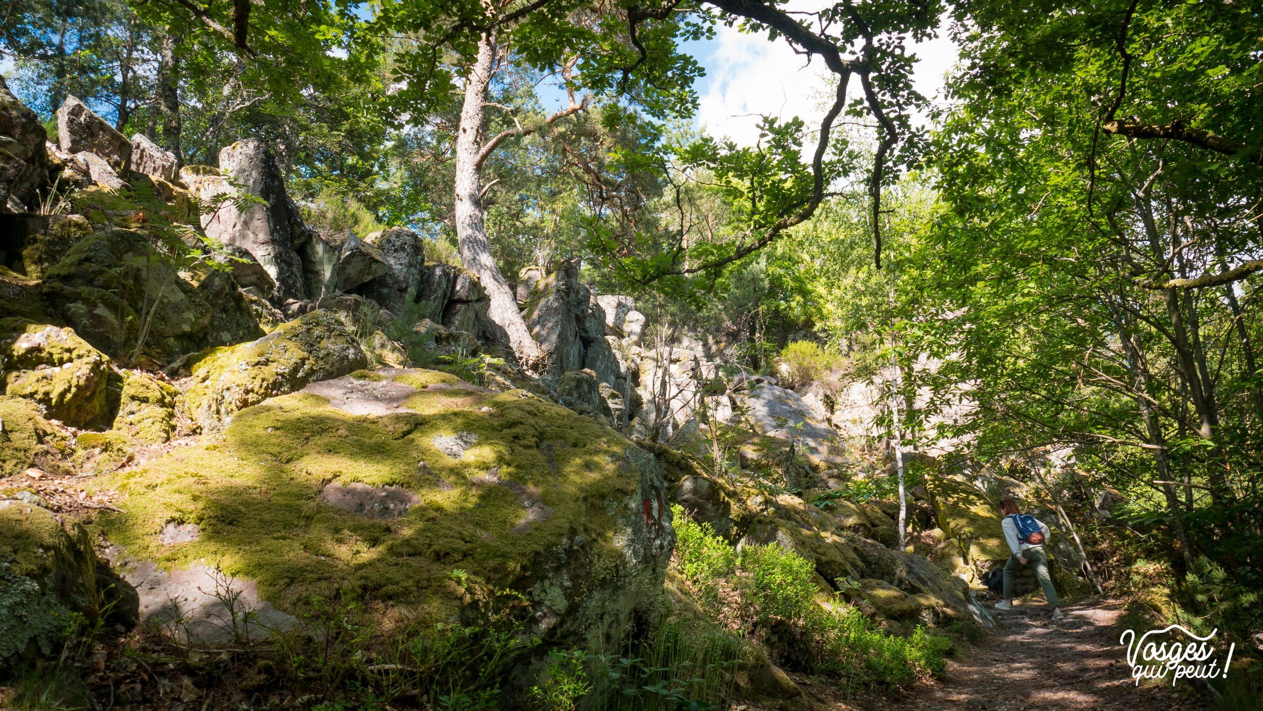 Blocs de pierres dans une forêt du massif des Vosges