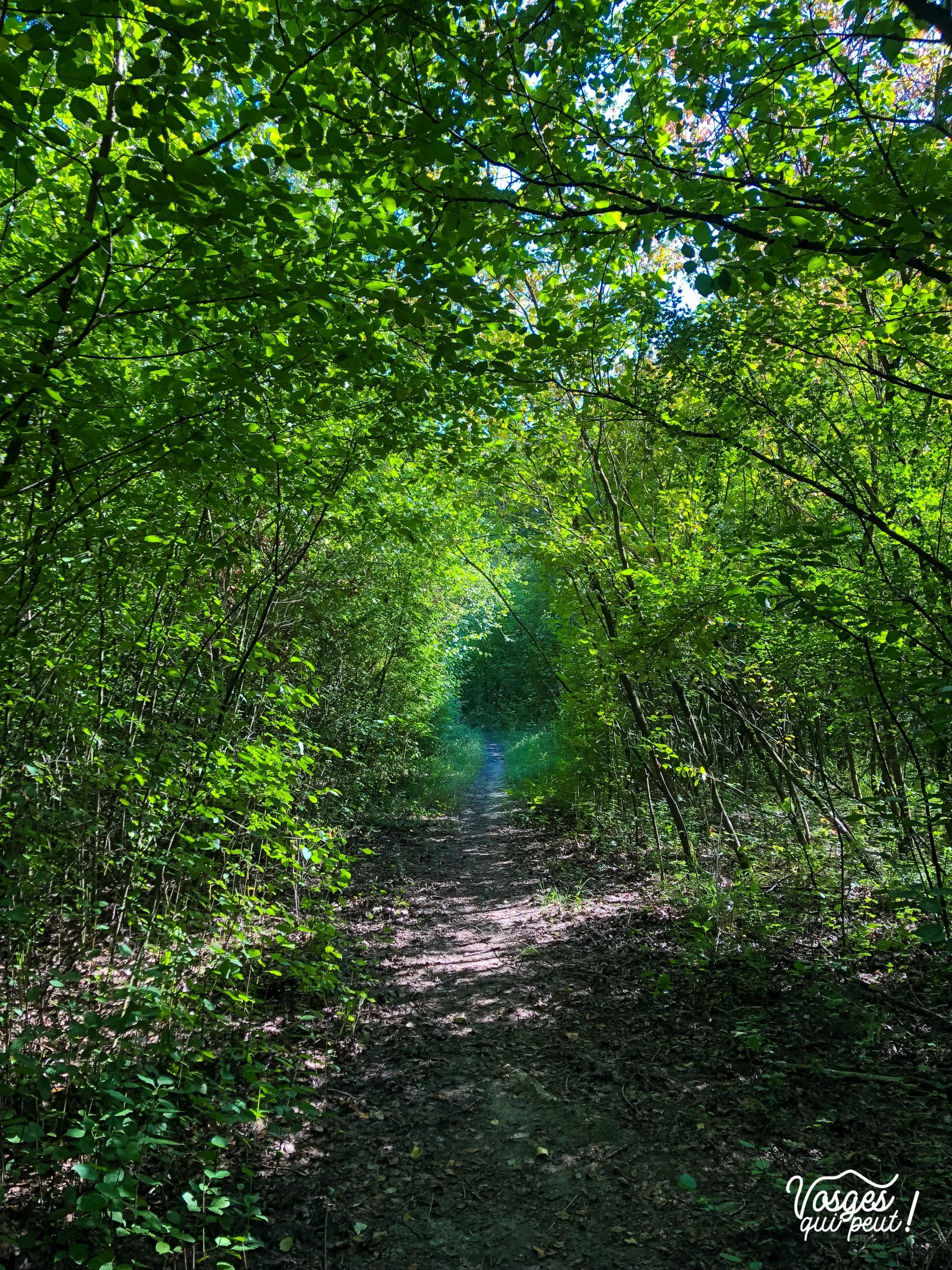 """Un chemin de """"forêt galerie"""" sur l'île du Rohrschollen à Strasbourg"""