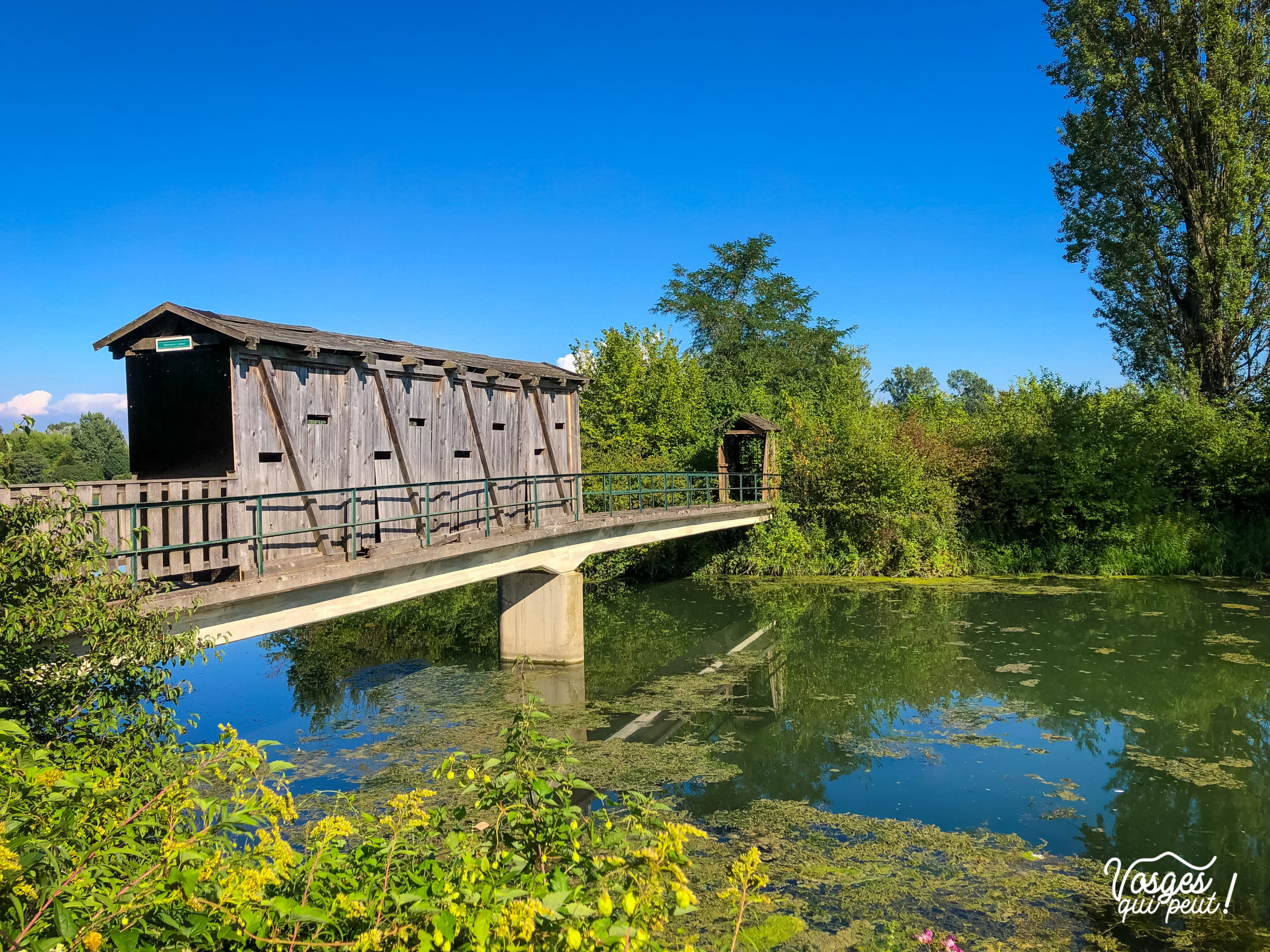 Un pont sur l'île du Rohrschollen
