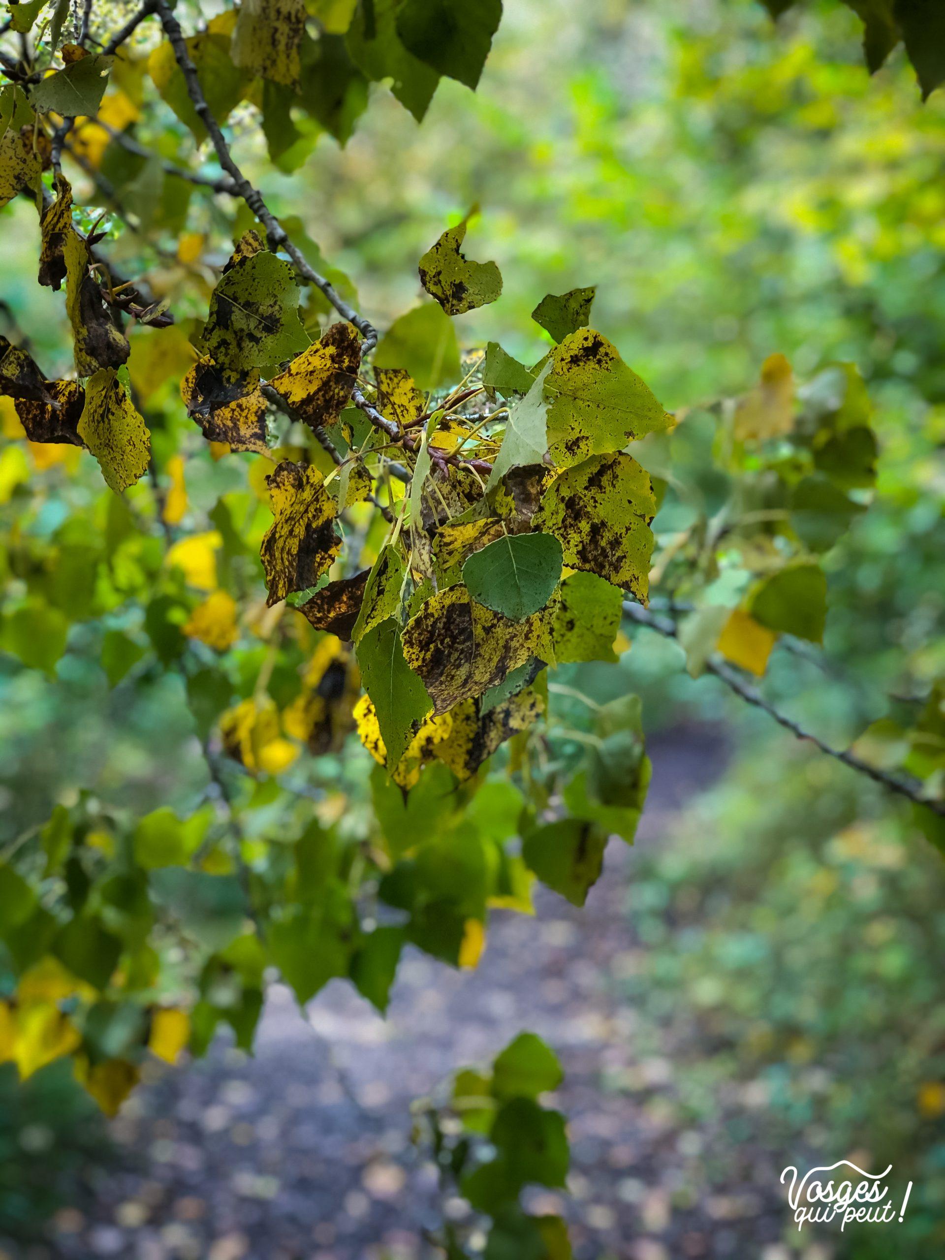 La végétation d'une forêt alluviale