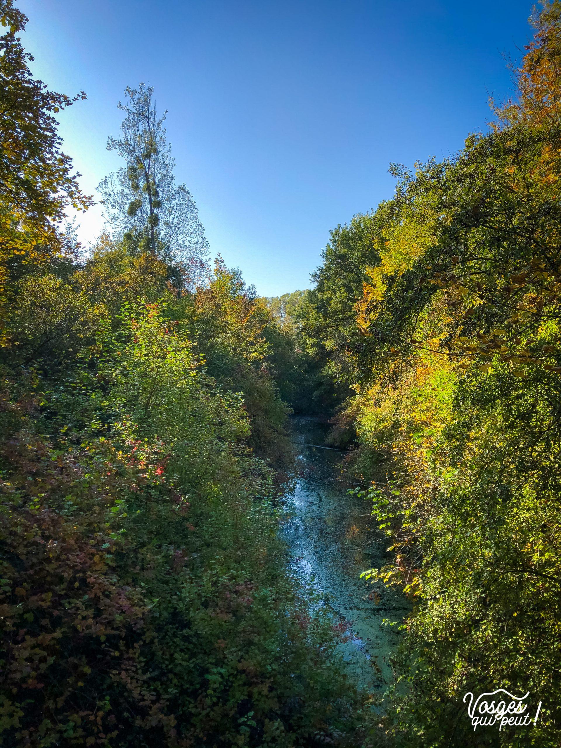 Un giessen dans la forêt du Pourtalès à la Robertsau au Nord de Strasbourg