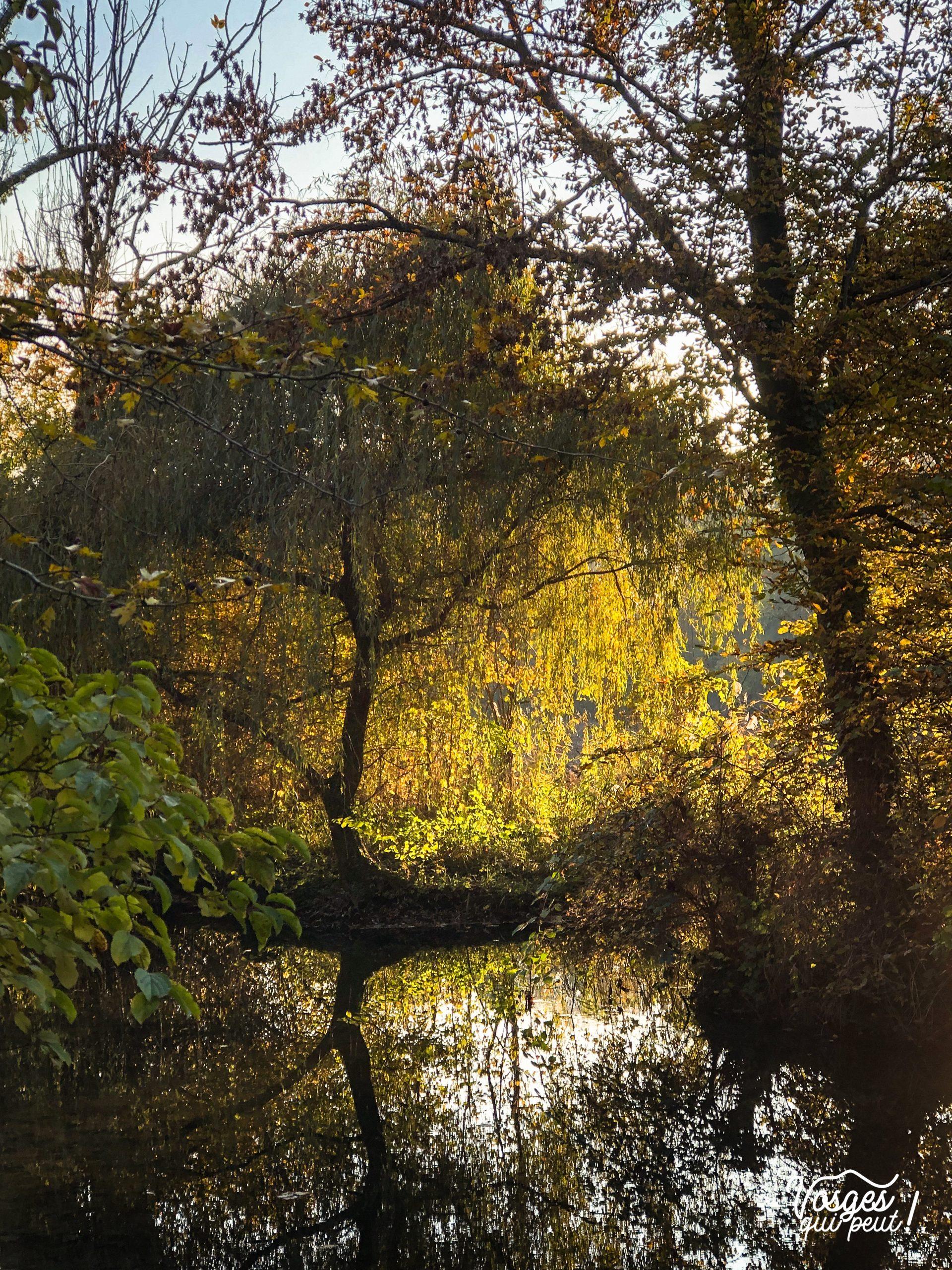 Des arbres et un cours d'eau le long du sentier de la faisandrie à Strasbourg