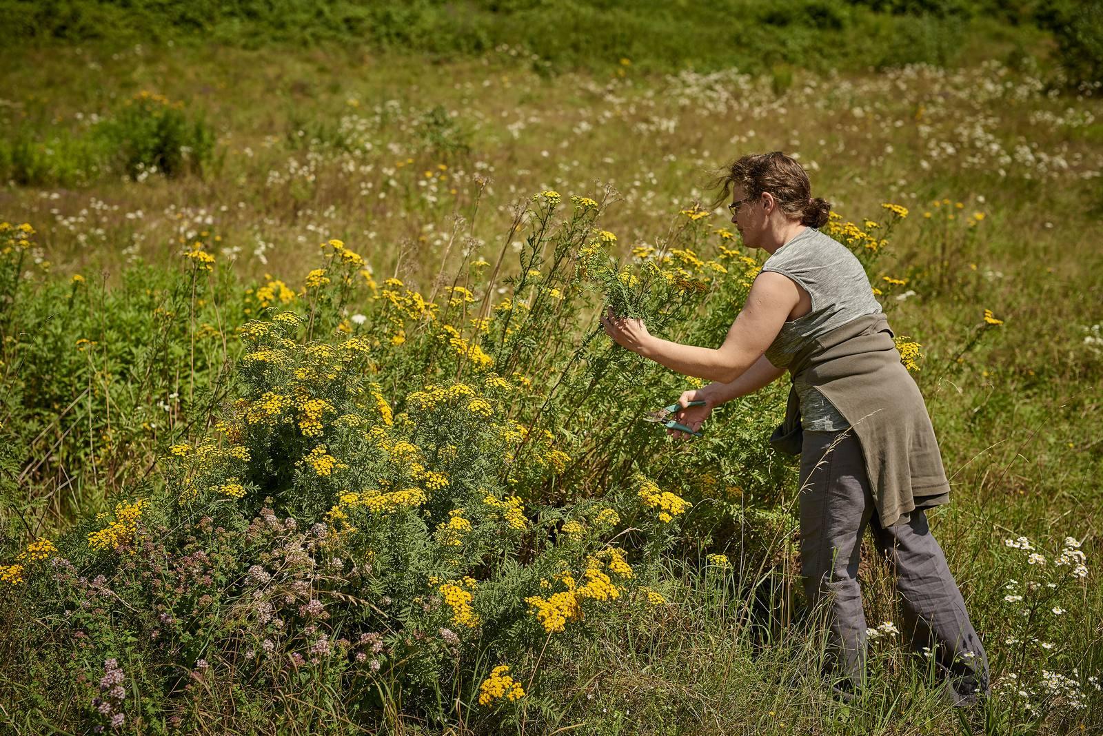 Colette Baecher cueille des plantes en pleine nature pour les cuisiner