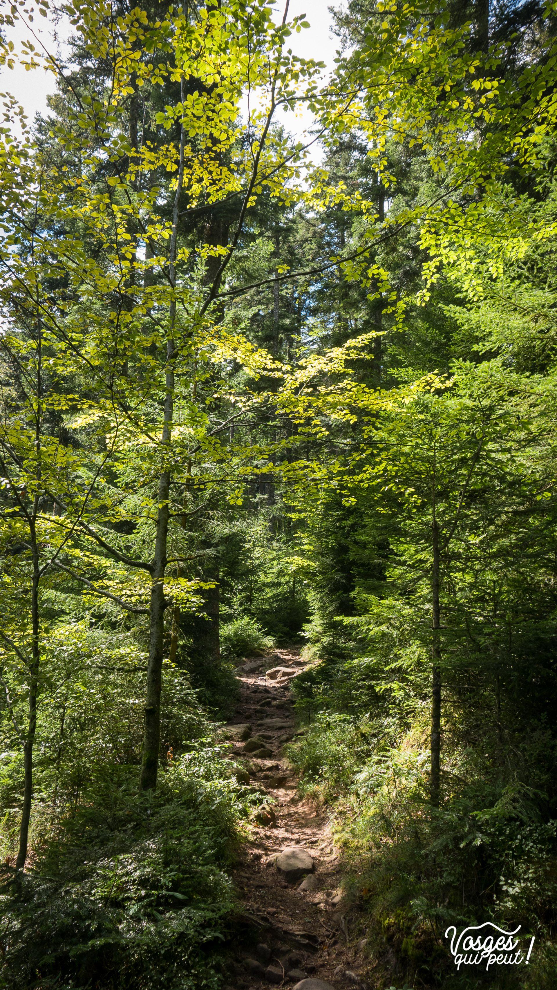 Un chemin de randonnée qui mène au château de Salm dans la vallée de la Bruche