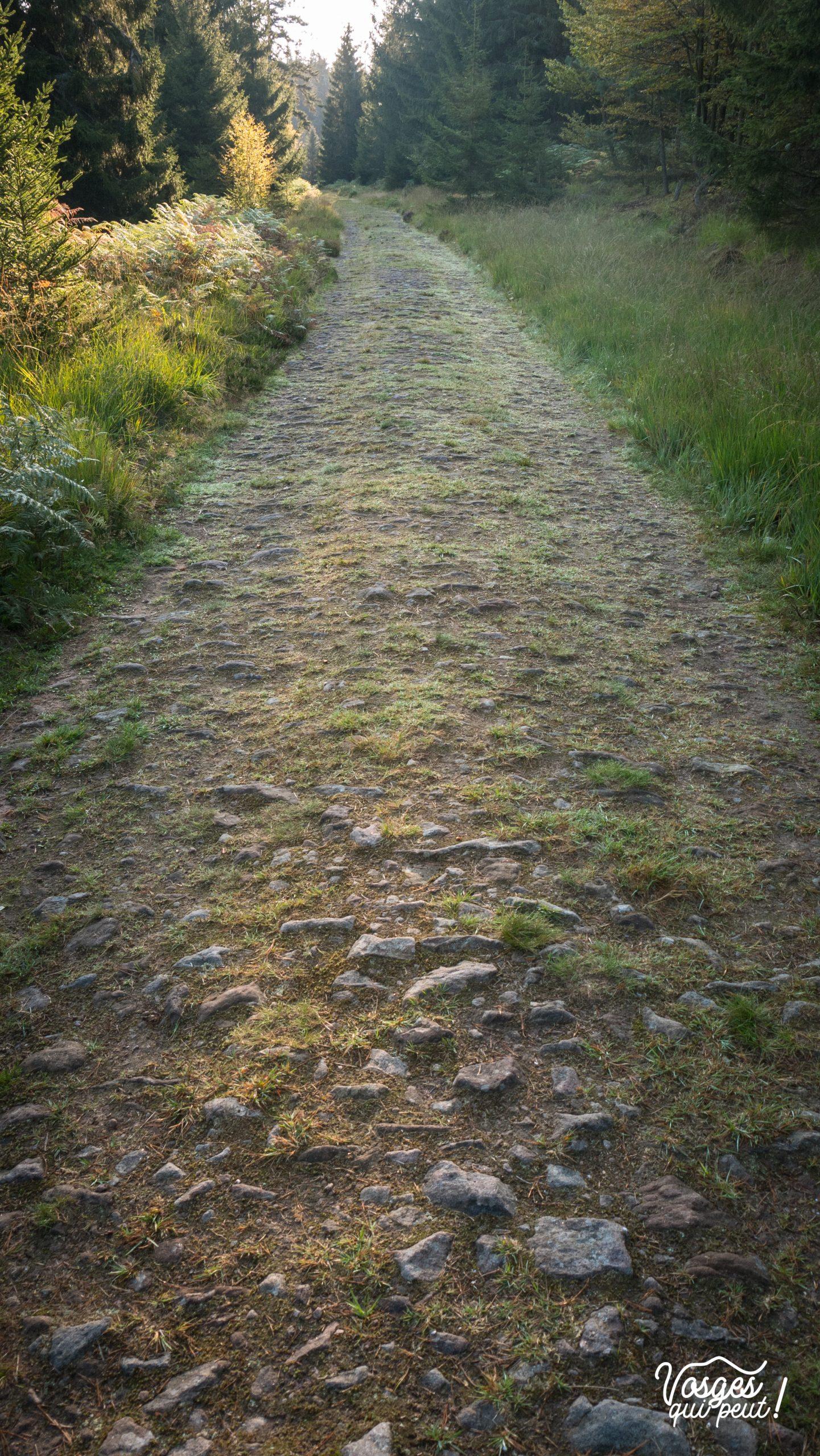 La route forestière des Allemands dans la vallée de la Bruche