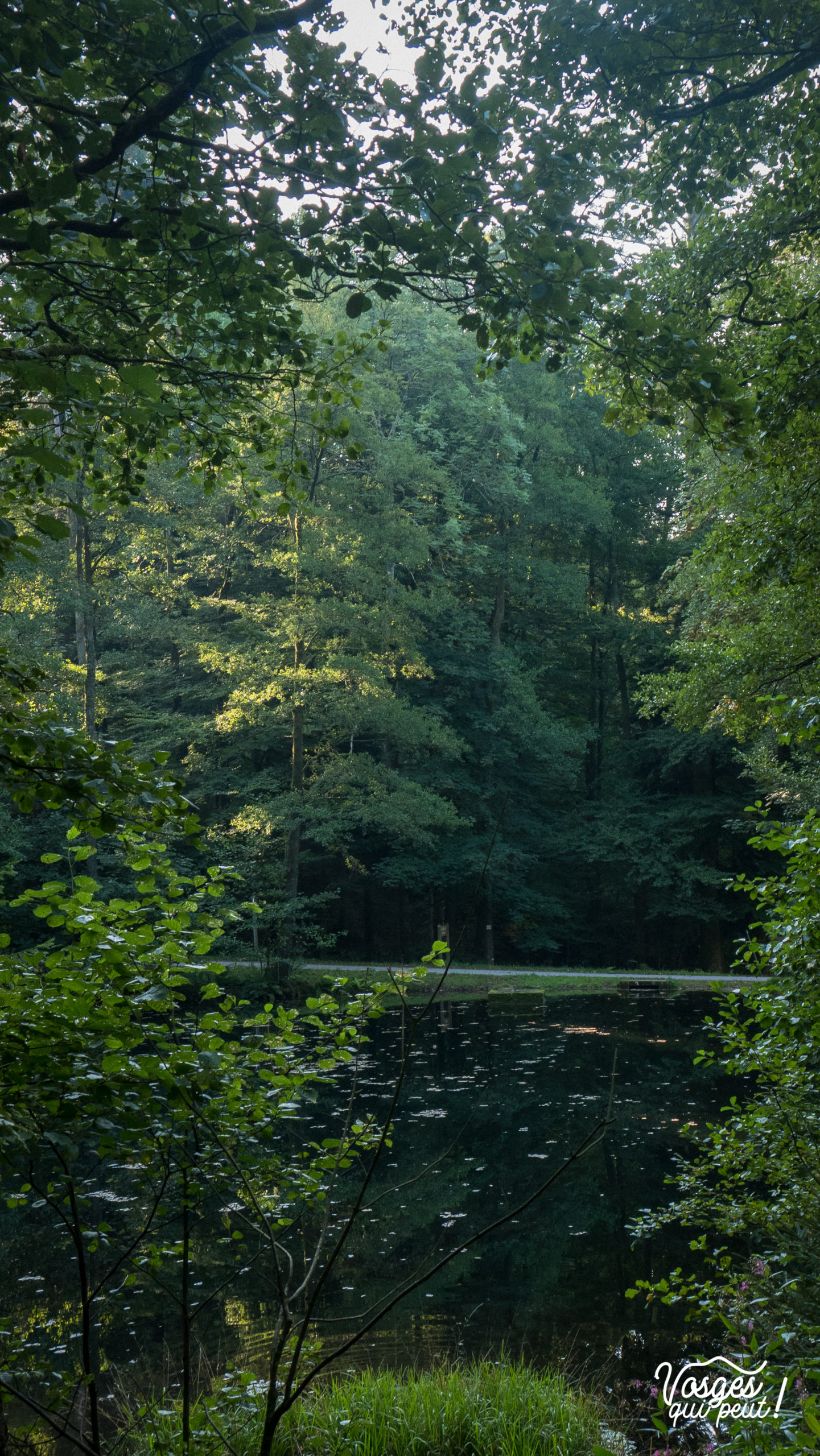 L'étang de la Falle est un petit lac dans la vallée de la Bruche