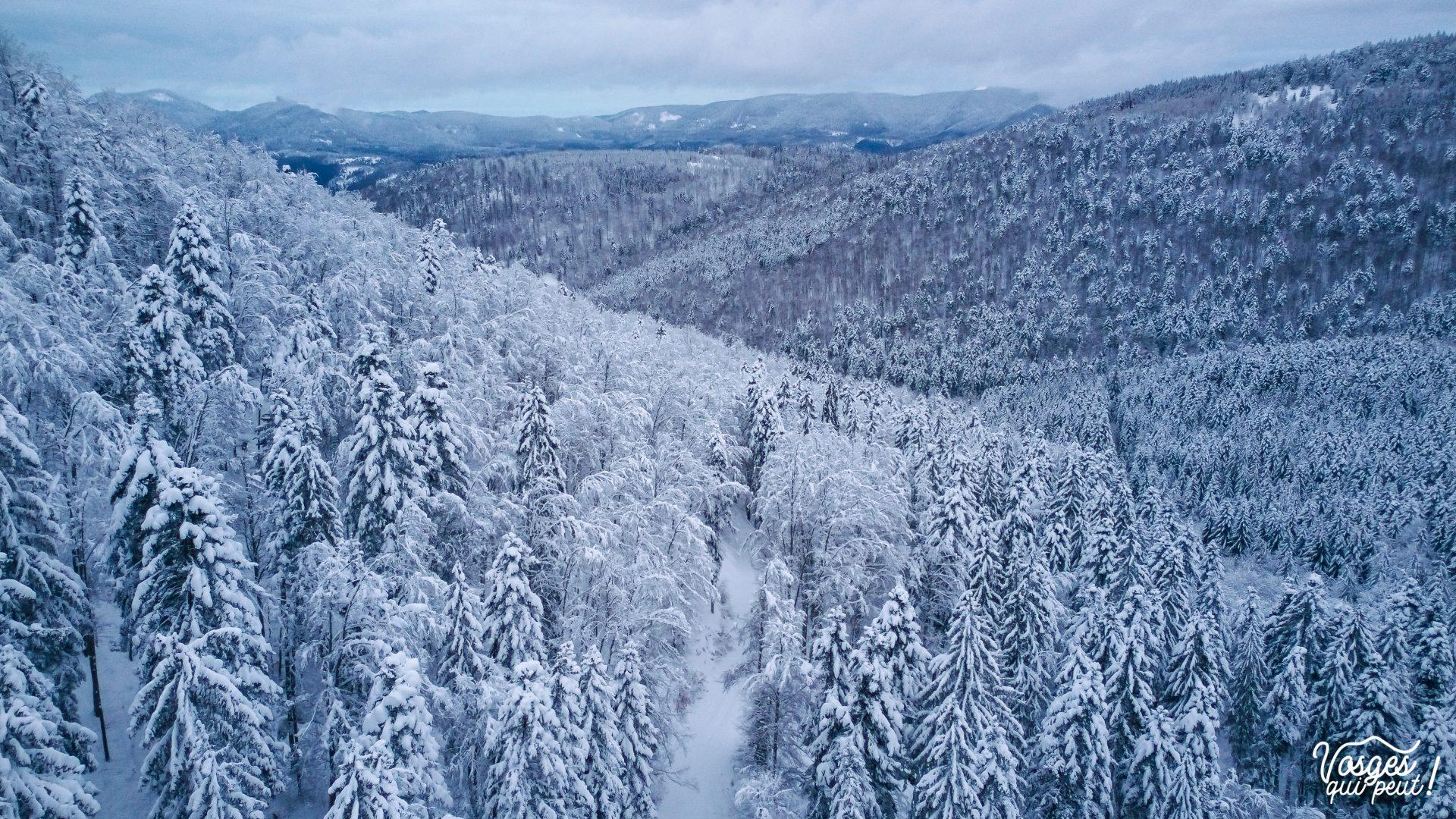 Paysage de forêt enneigée dans les Vosges