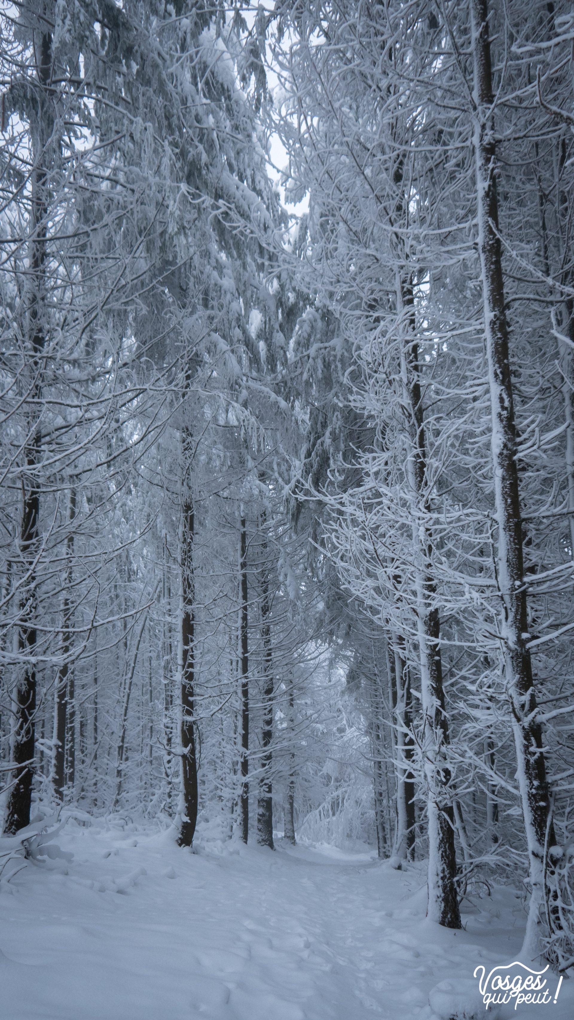 Forêt des Vosges en hiver pendant une randonnée en raquettes