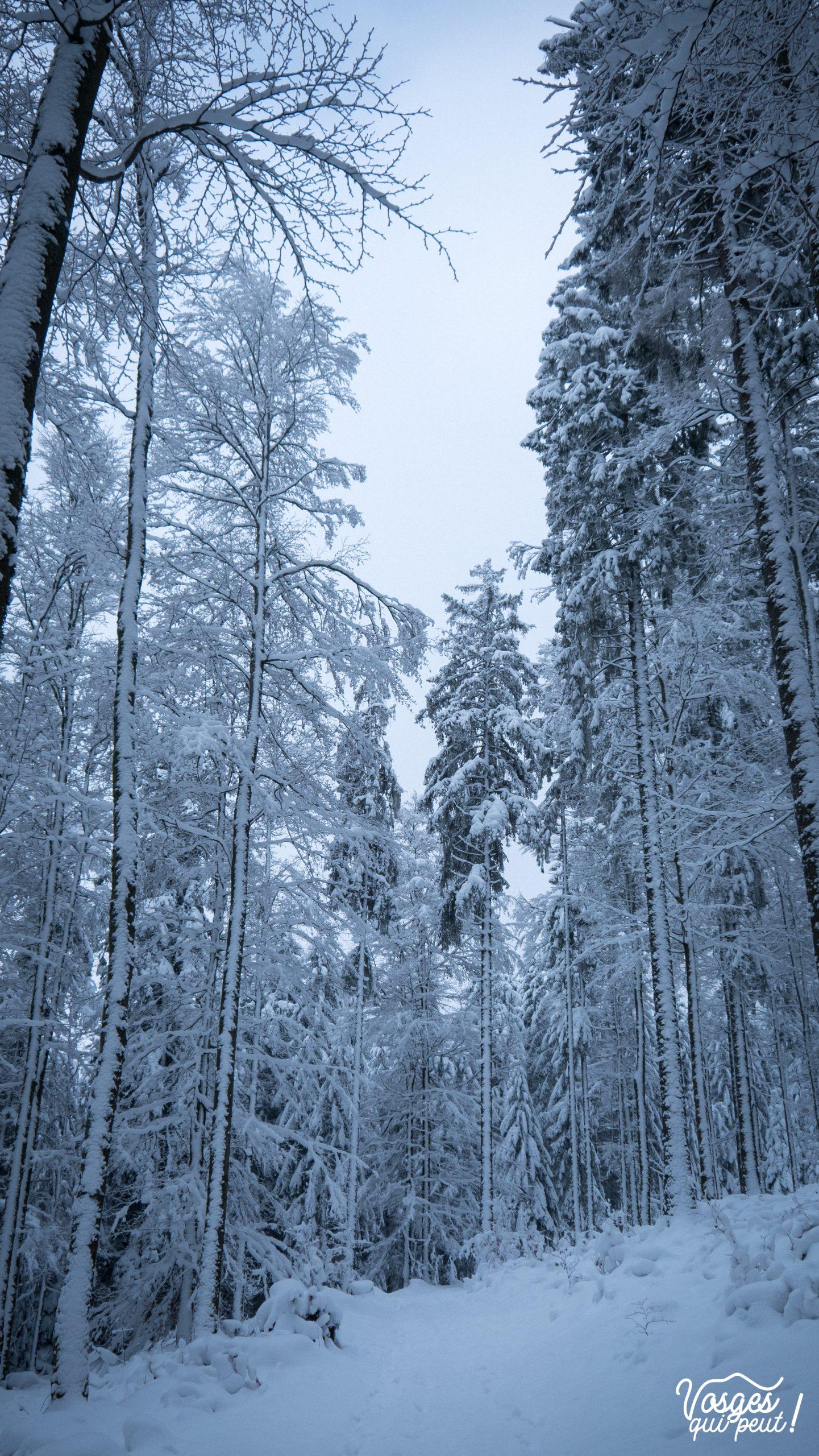 Une forêt des Vosges sous la neige pendant une rando en raquettes