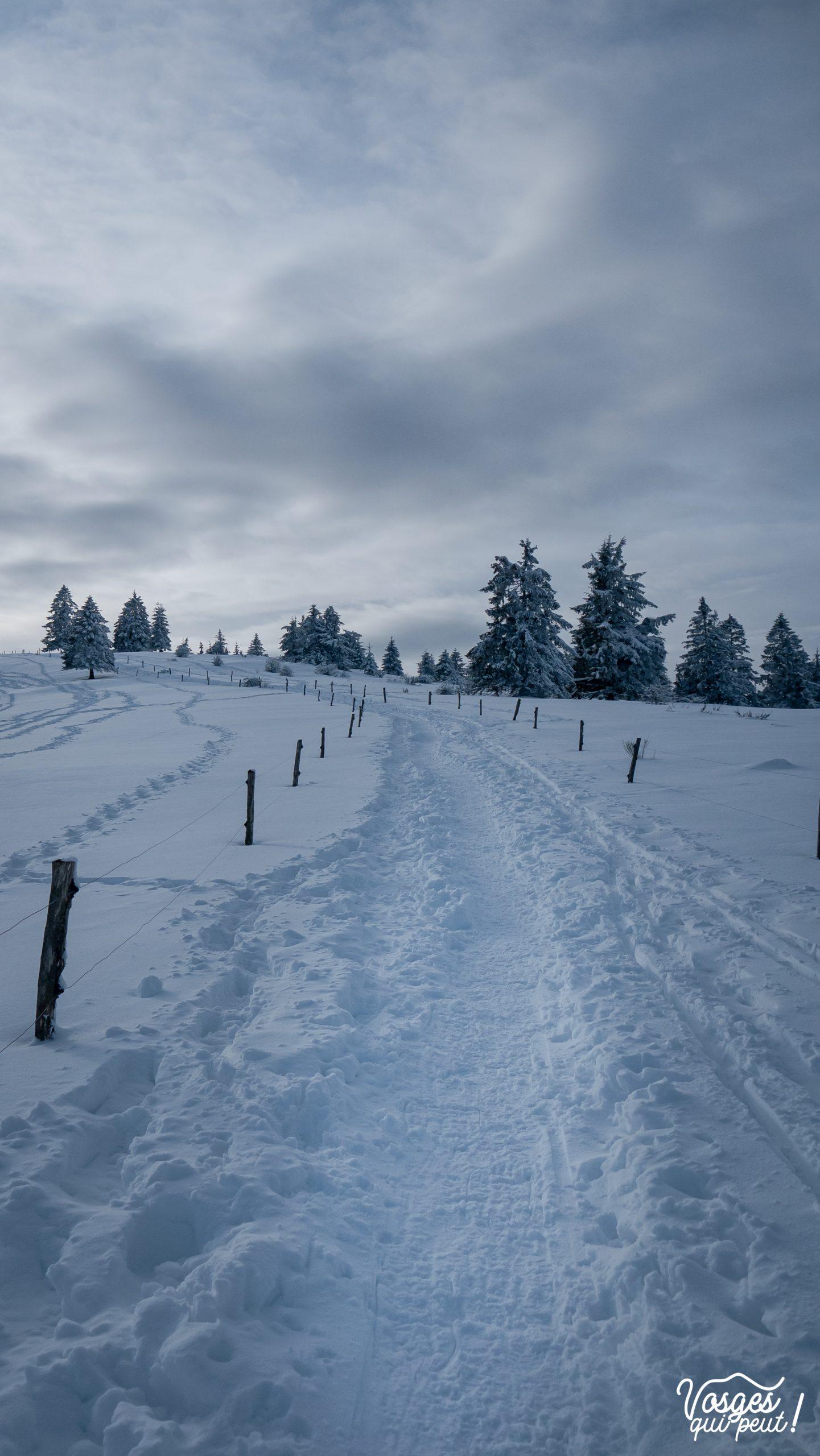 Le Schelmeck, sommet au-dessus de Grendelbruch dans les Vosges