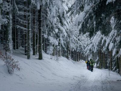 Des randonneurs en raquettes autour de Grendelbruch dans les Vosges