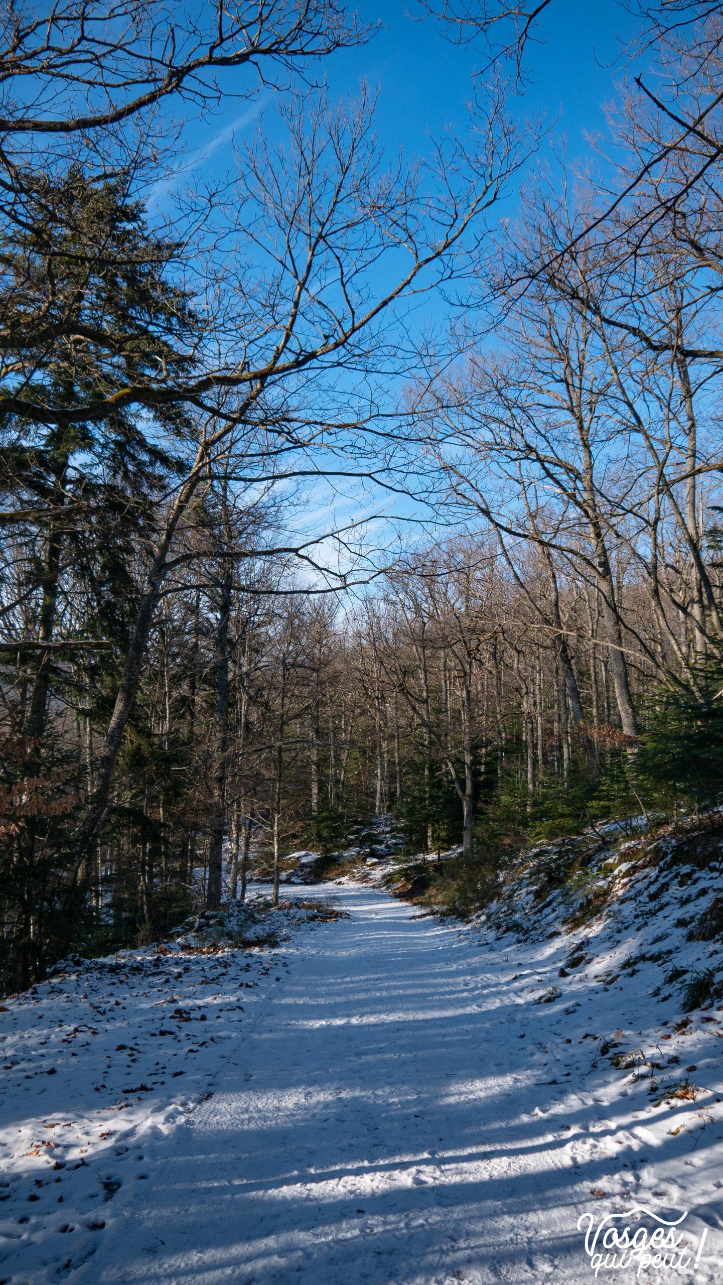 Une route forestière dans la forêt d'Andlau
