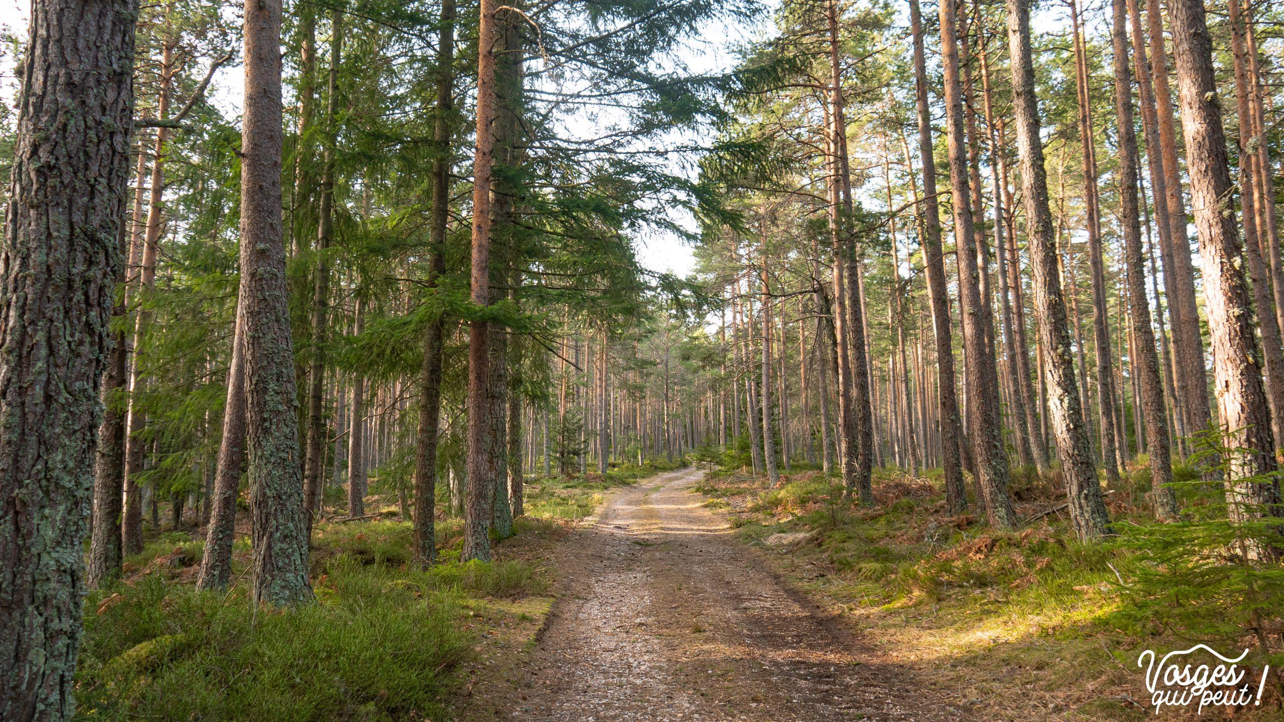 Paysage de forêt dans les Vosges pendant une randonnée
