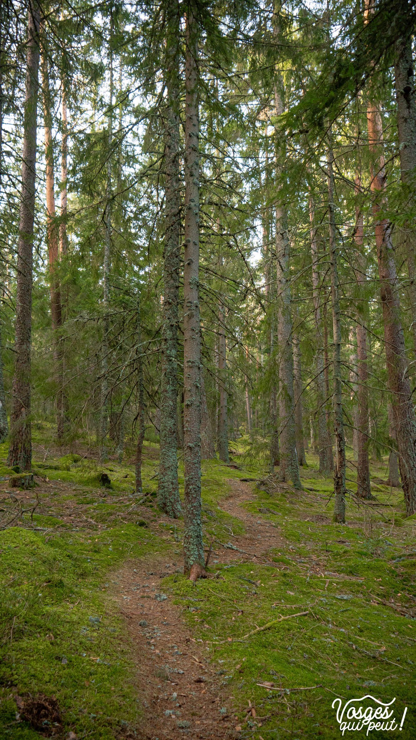 Paysage de forêt dans les Vosges autour du Linge
