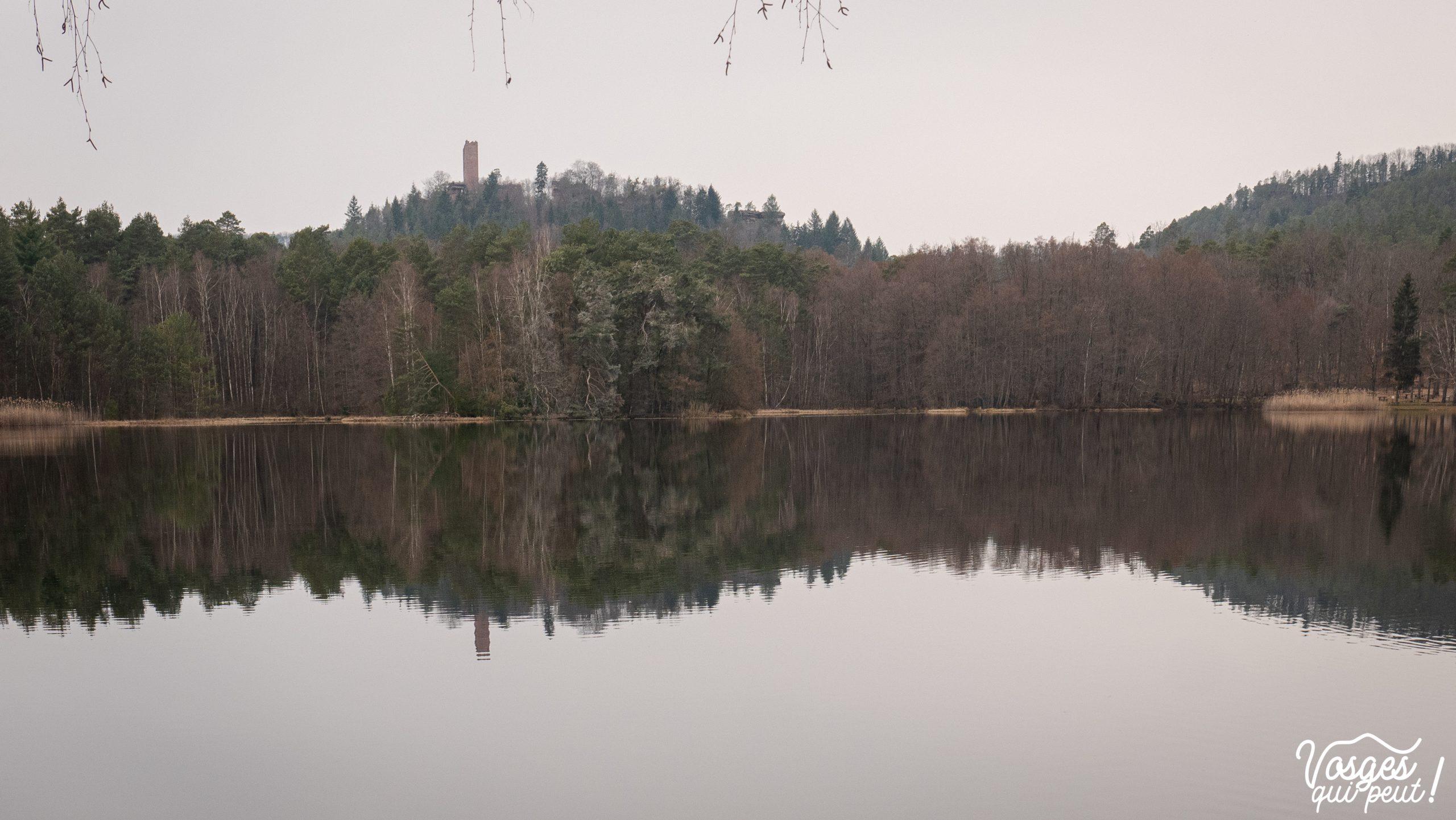 L'étang de Hanau dans le Pays de Bitche