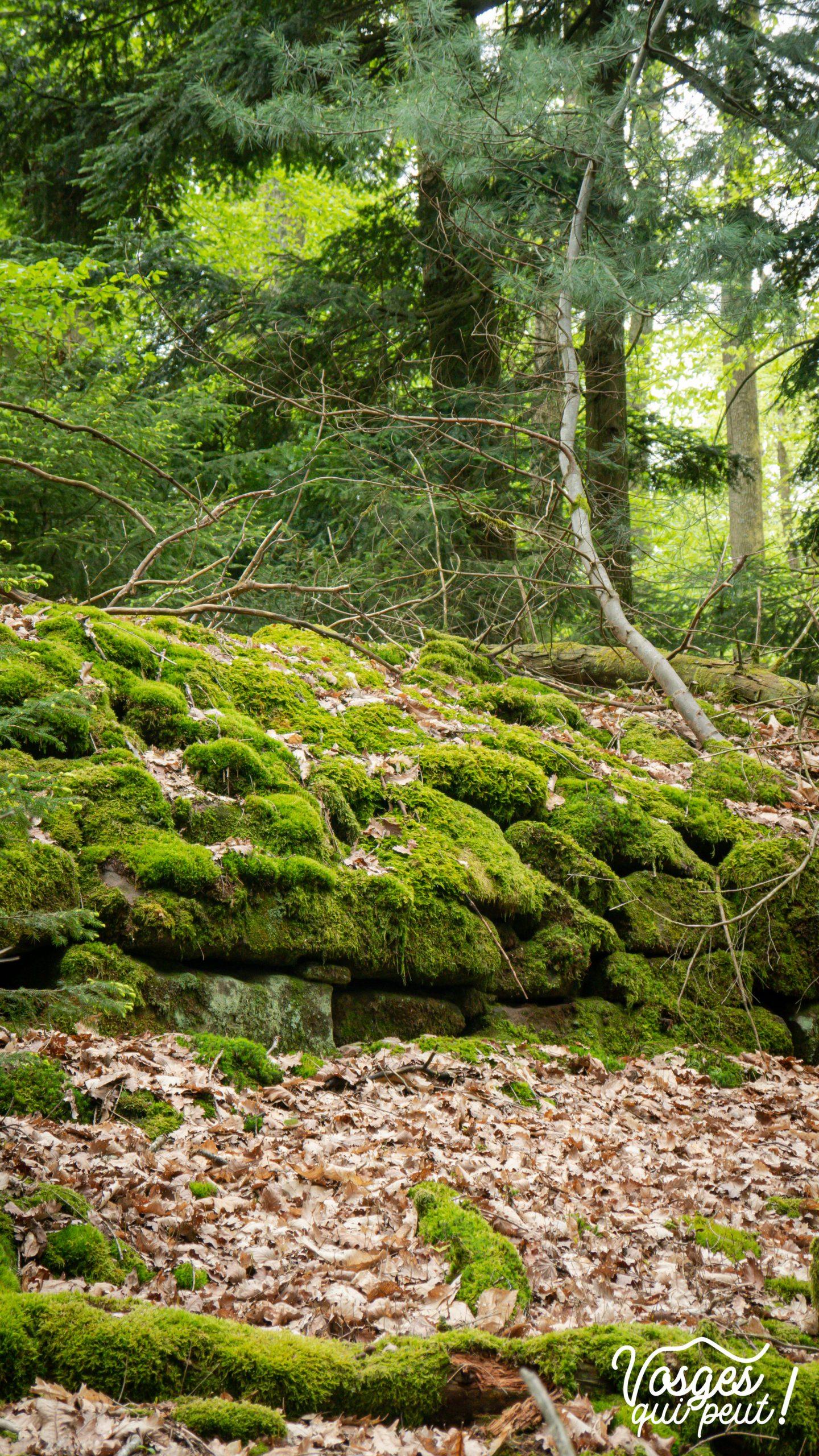 Le muret du jardin des fées derrière le château du Wasenbourg