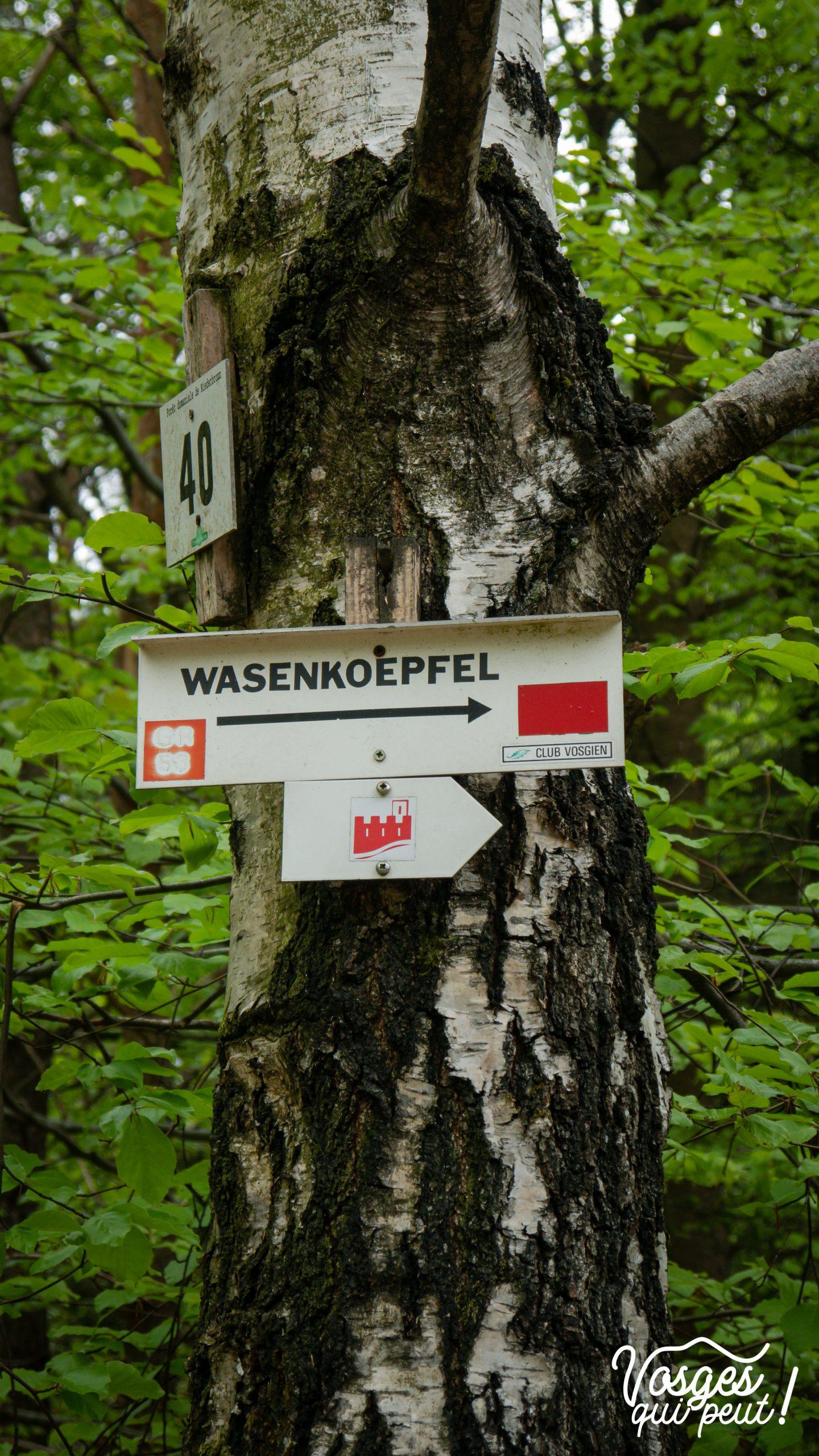 Balisage dans les Vosges du Nord près de Niederbronn