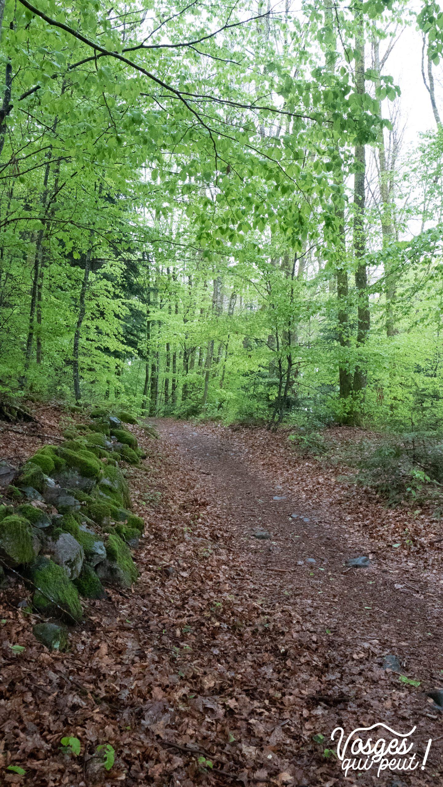 Forêt aux Mille Étangs