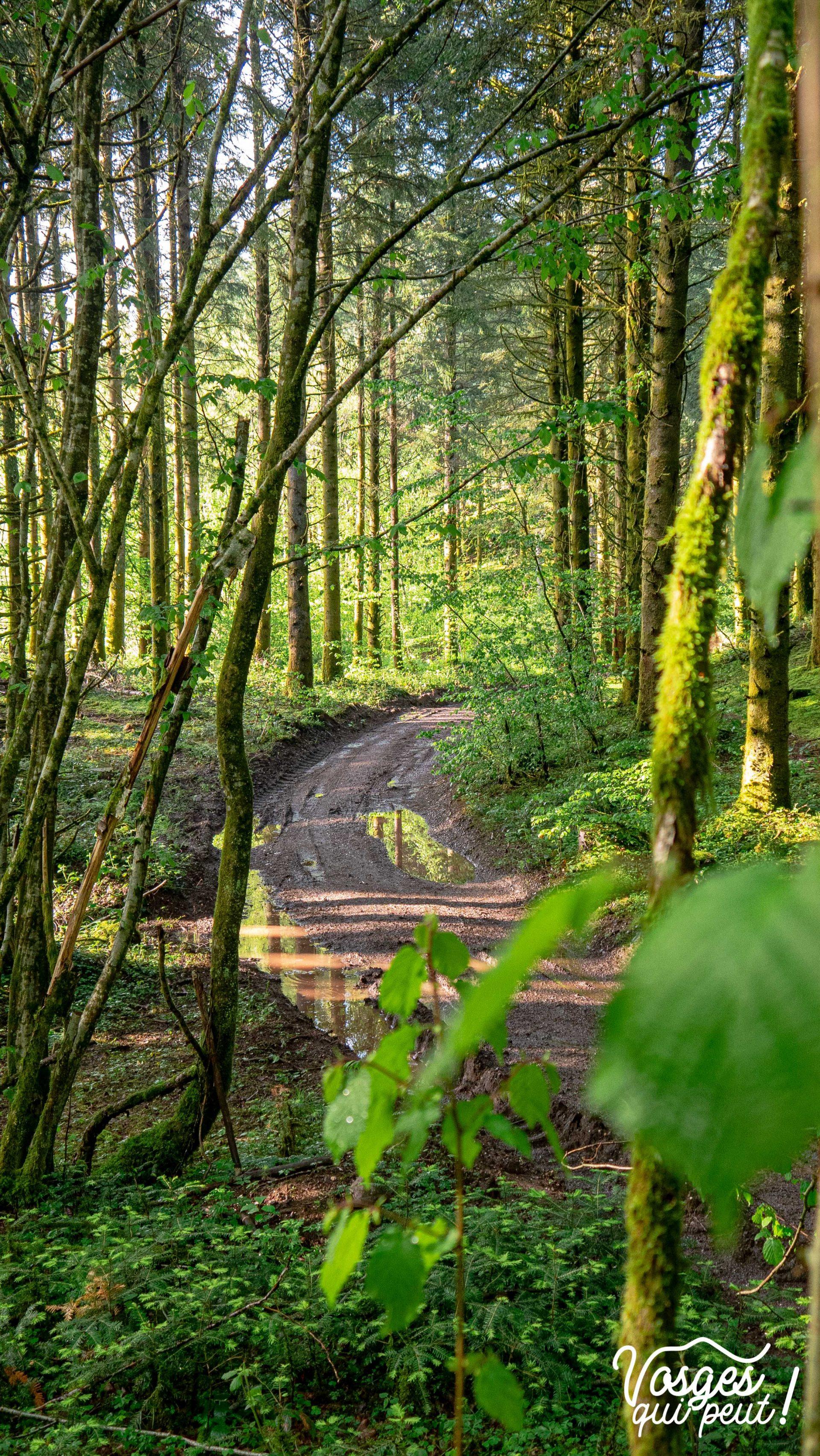 Route forestière aux mille étangs