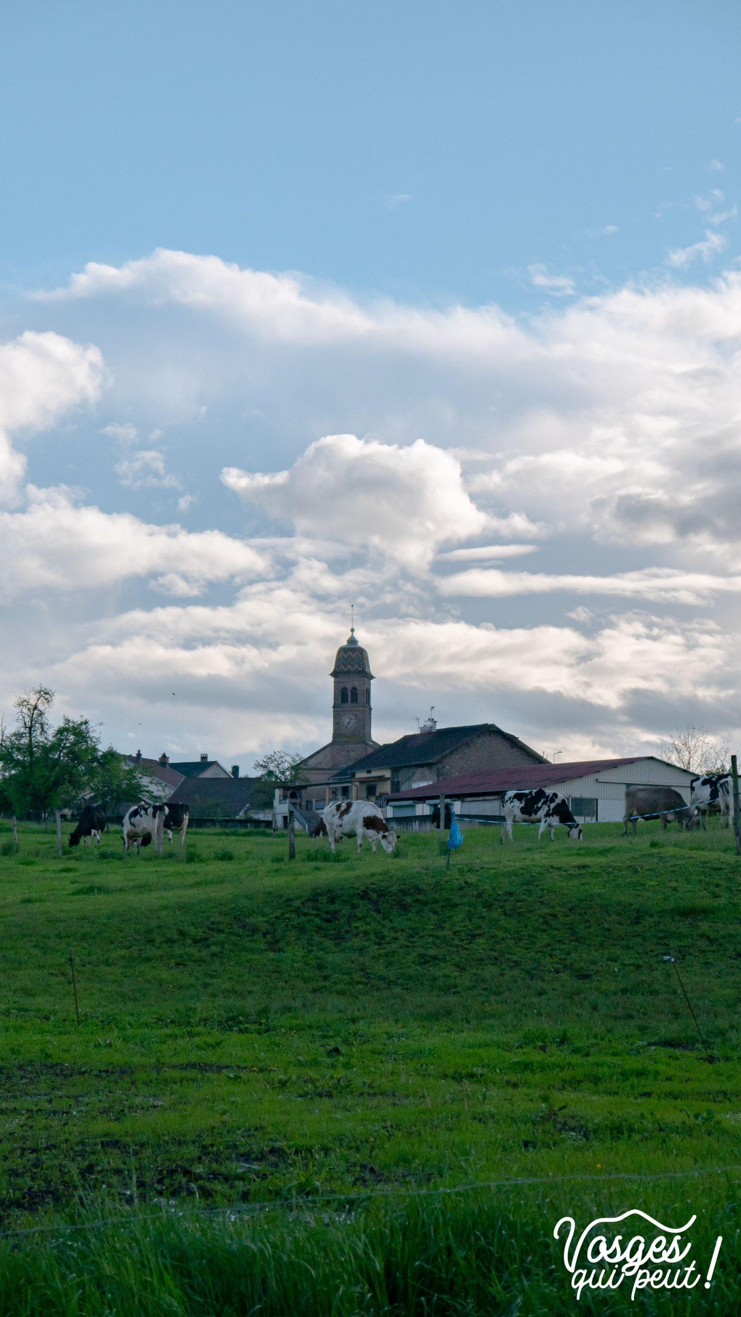 Église du village d'Écromagny et des vaches dans un pré