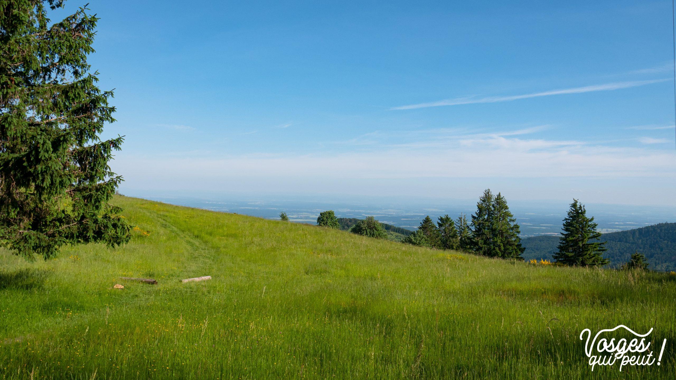 Point de vue dans le Massif des Vosges