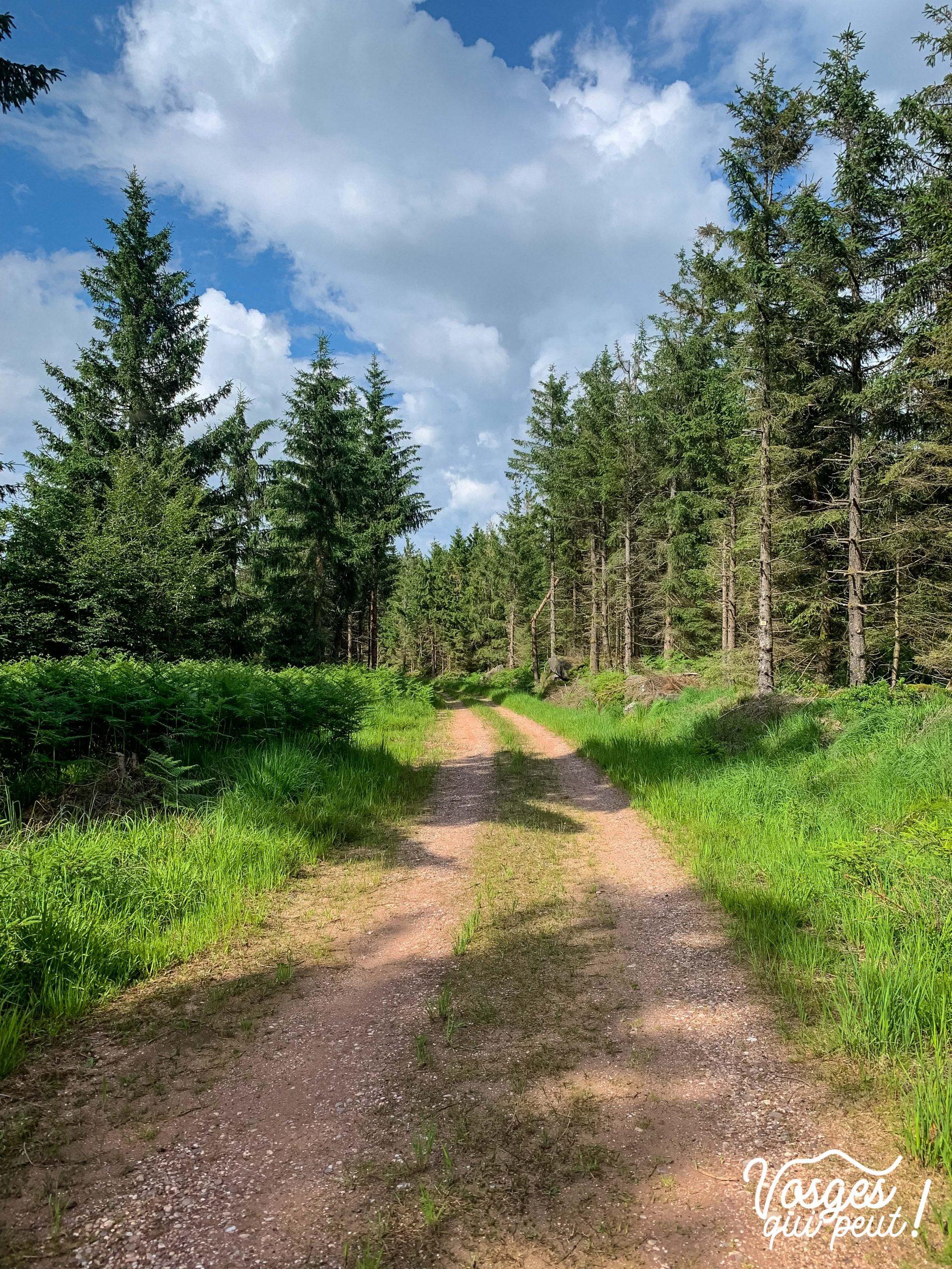 Chemin forestier dans le Massif des Vosges