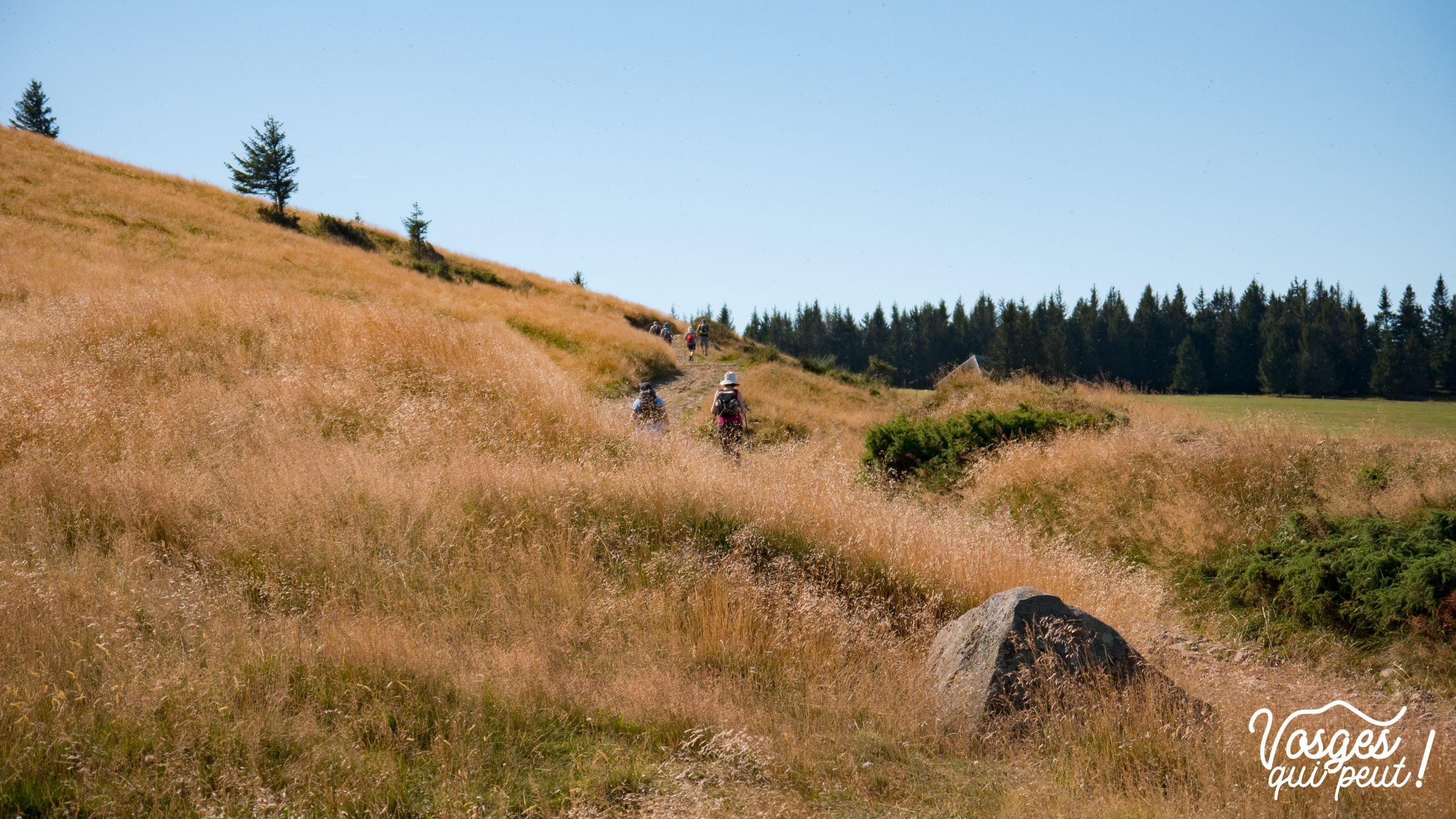 Randonneurs au col du Petit Ballon dans le Massif des Vosges